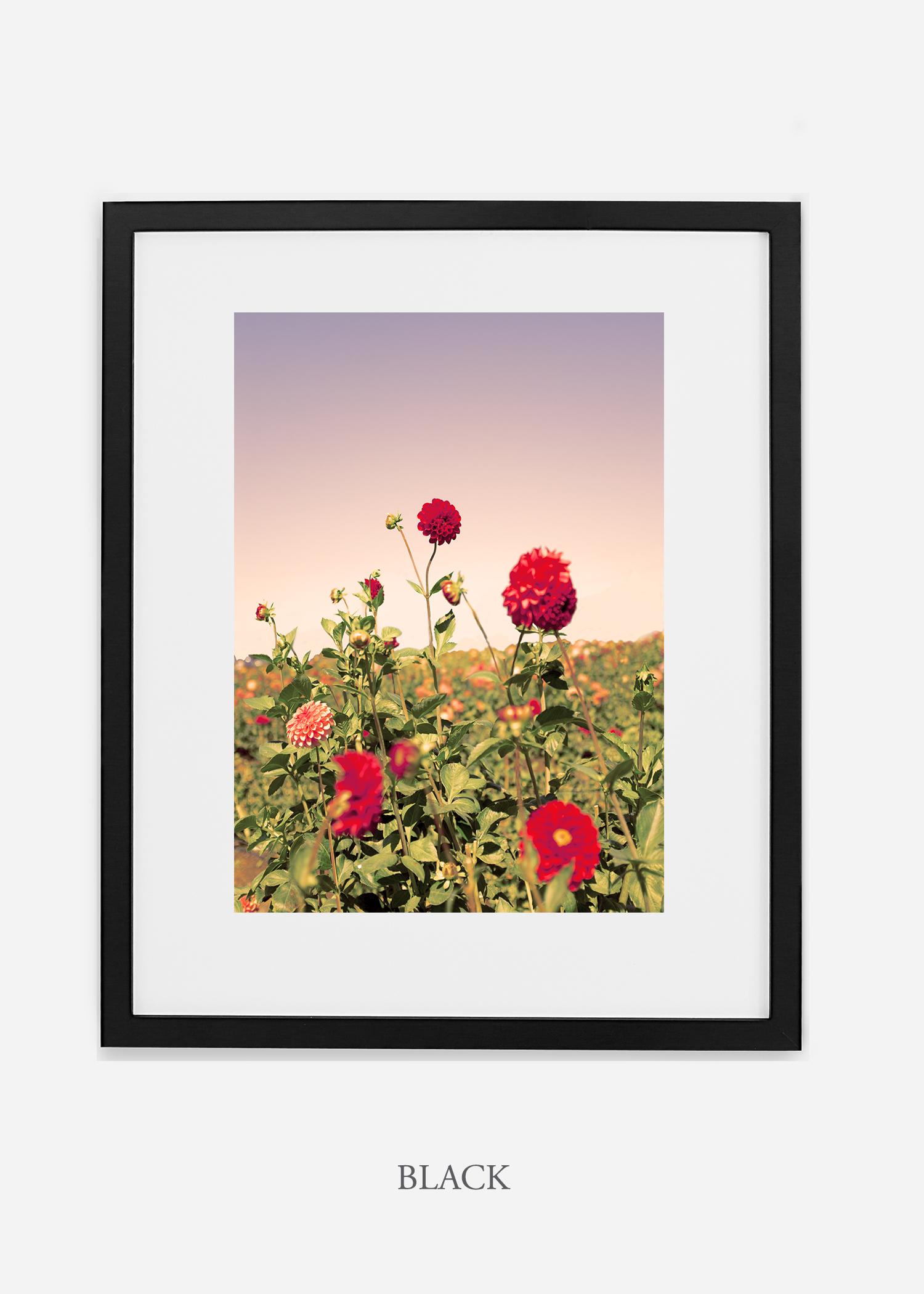 DahliaNo.8-black-frame-mat-interior-design-botanical-print-art-wilder-california-wilder-paper.jpg