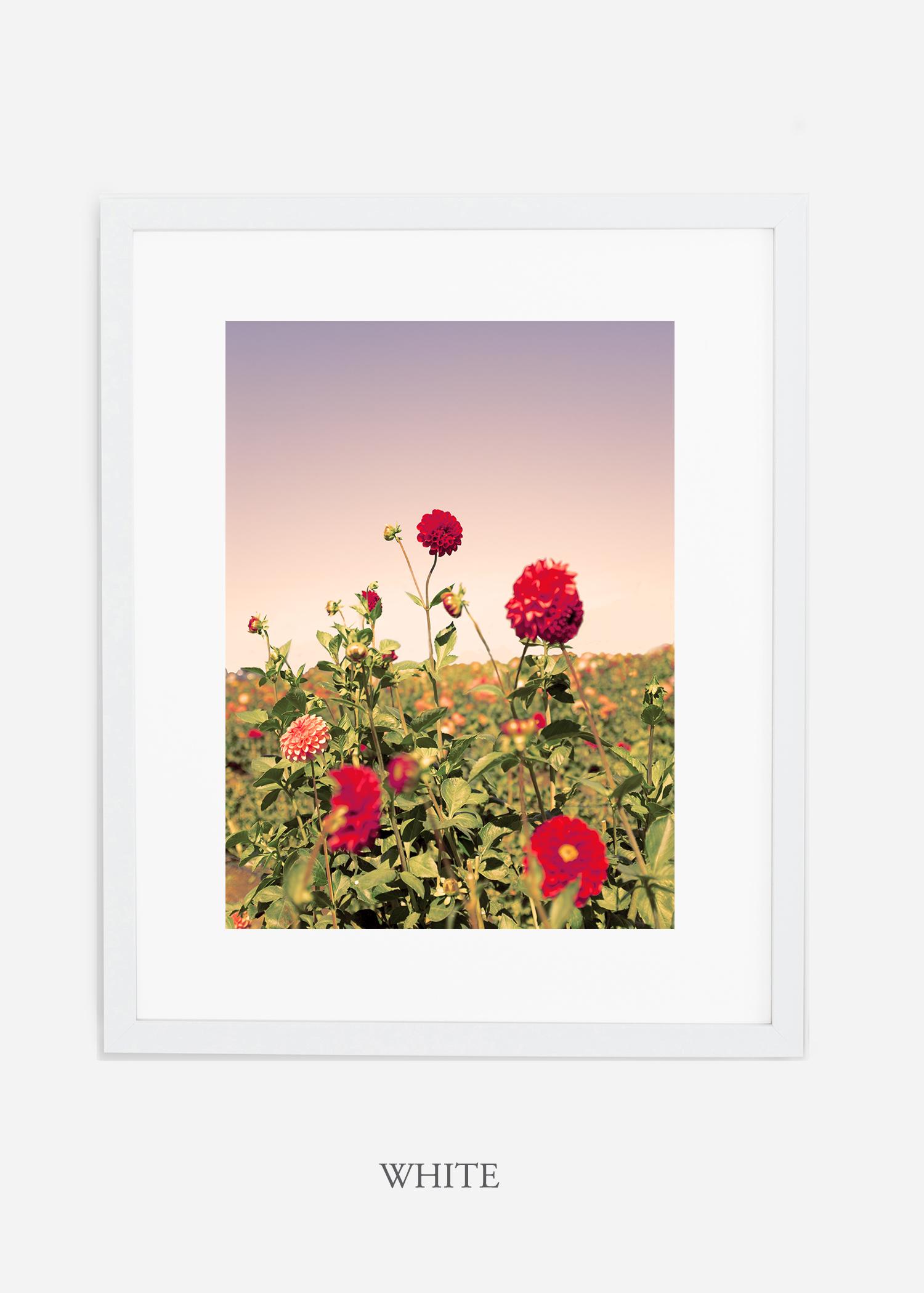DahliaNo.8-white-frame-mat-interior-design-botanical-print-art-wilder-california-wilder-paper.jpg