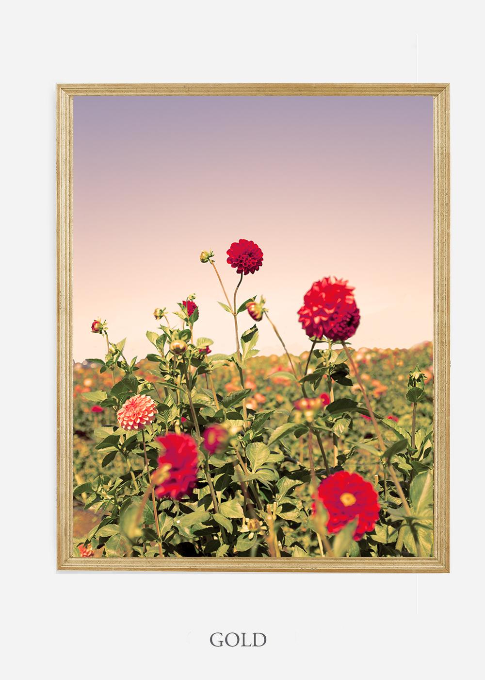 NoMat-Gold-Frame-DahliaNo.8-Wilder-California-Art-Floral-Home-decor-Prints-Dahlia-Botanical-Artwork-Interior-design.jpg