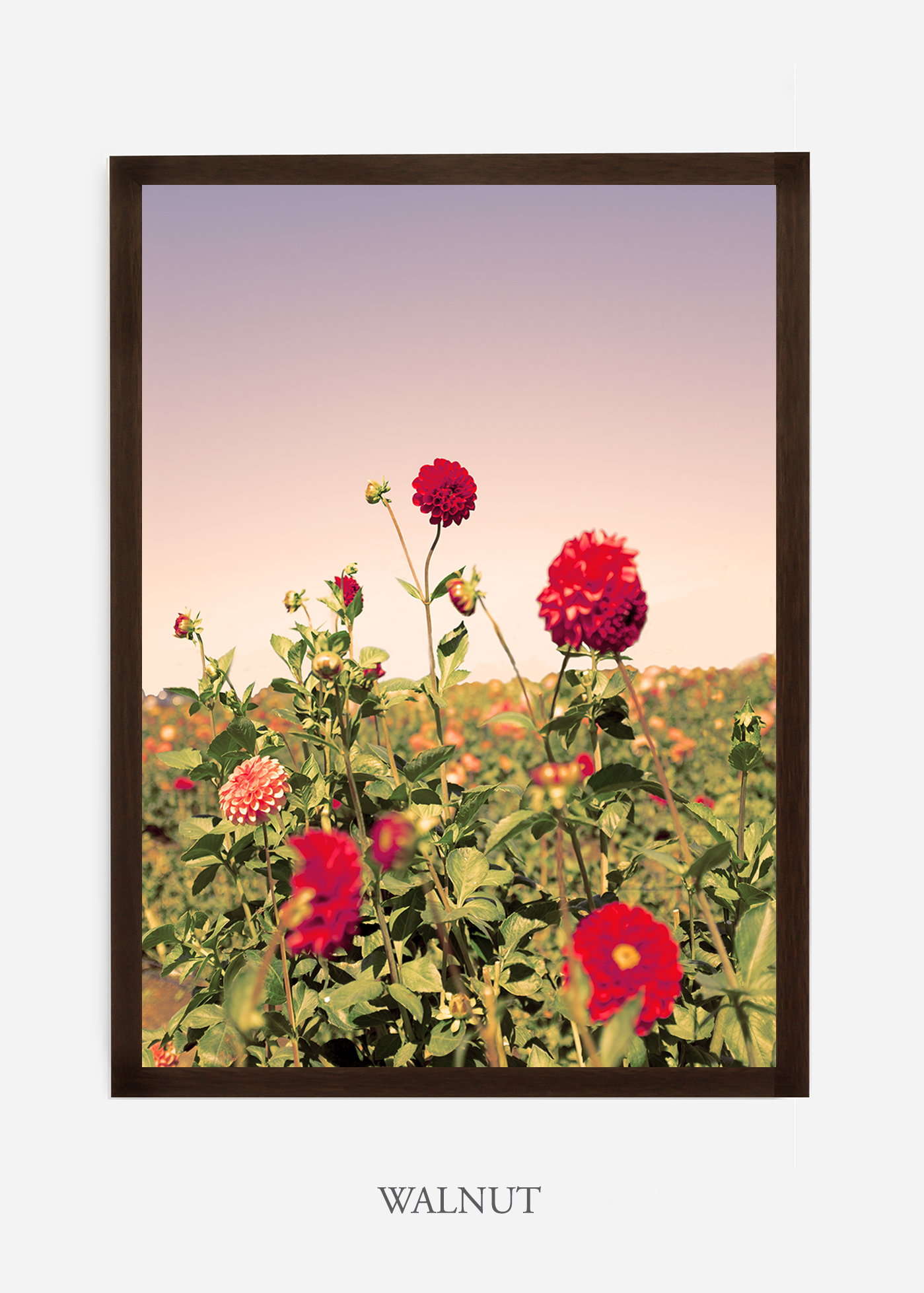 DahliaNo.8-walnut-frame-interior-design-botanical-print-art-wilder-california-wilder-paper.jpg
