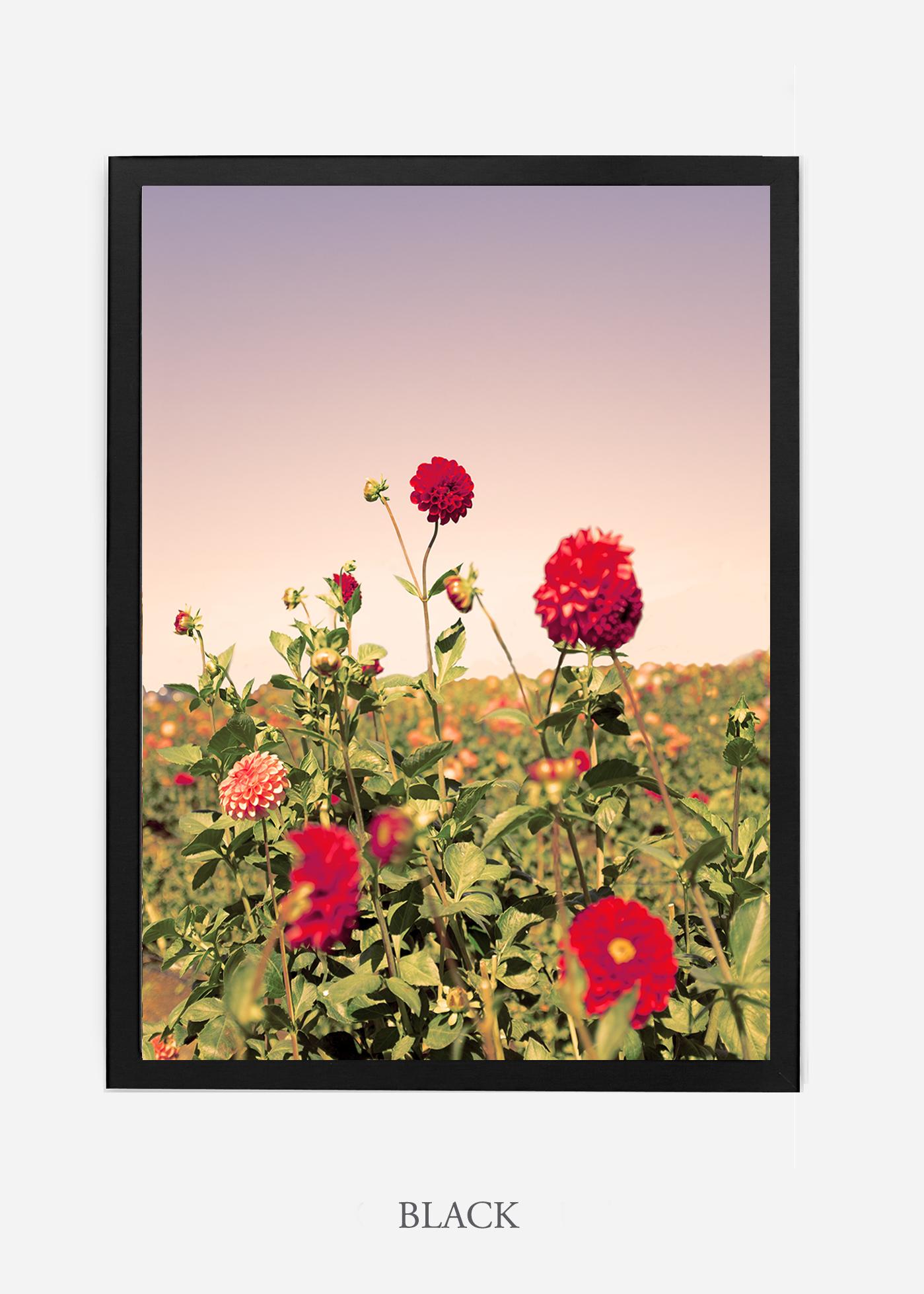 wilder-california-dahlia-print-botanical-red-interior-design-unframed.jpg