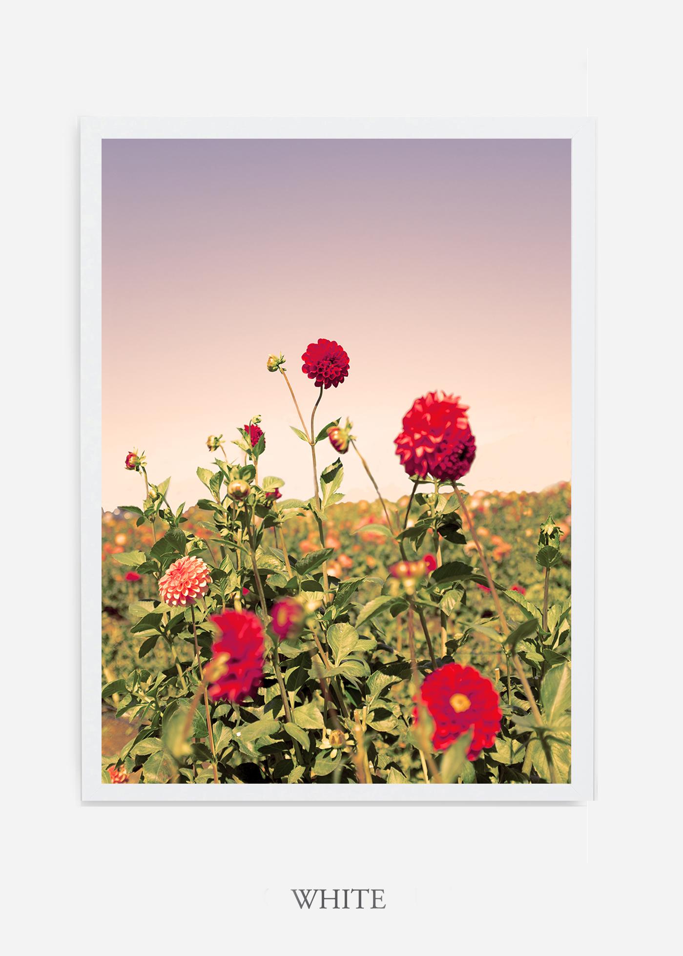 DahliaNo.8-white-frame-interior-design-botanical-print-art-wilder-california-wilder-paper.jpg