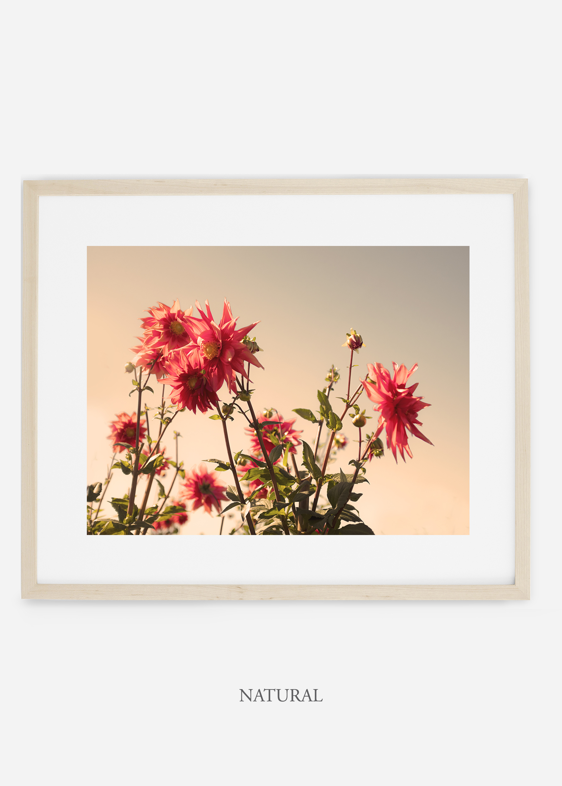 wilder-california-naturalframe-dahlia-9-minimal-botanical-print-art-interior-design.jpg
