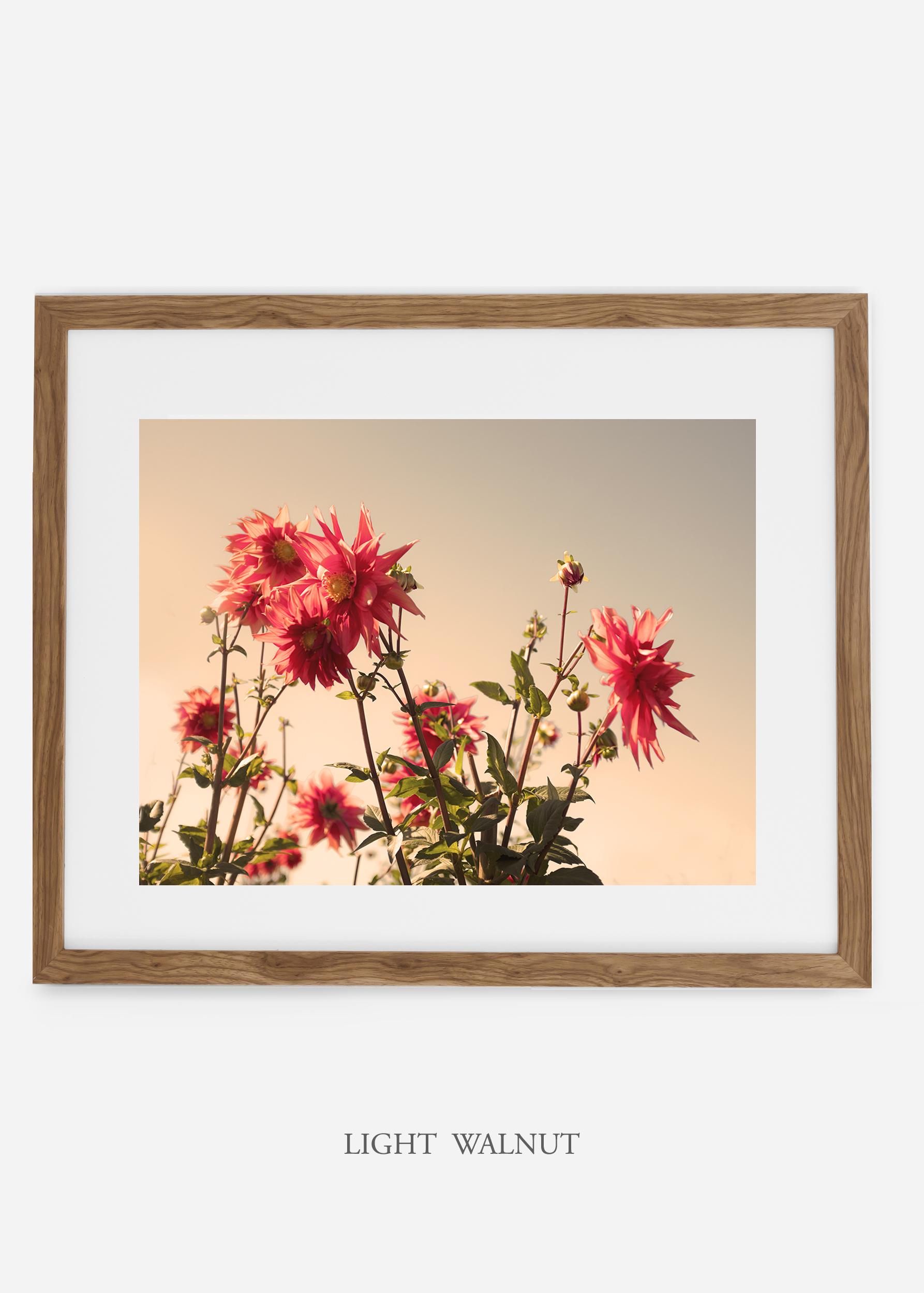 wilder-california-lightwalnutframe-dahlia-9-minimal-botanical-print-art-interior-design.jpg