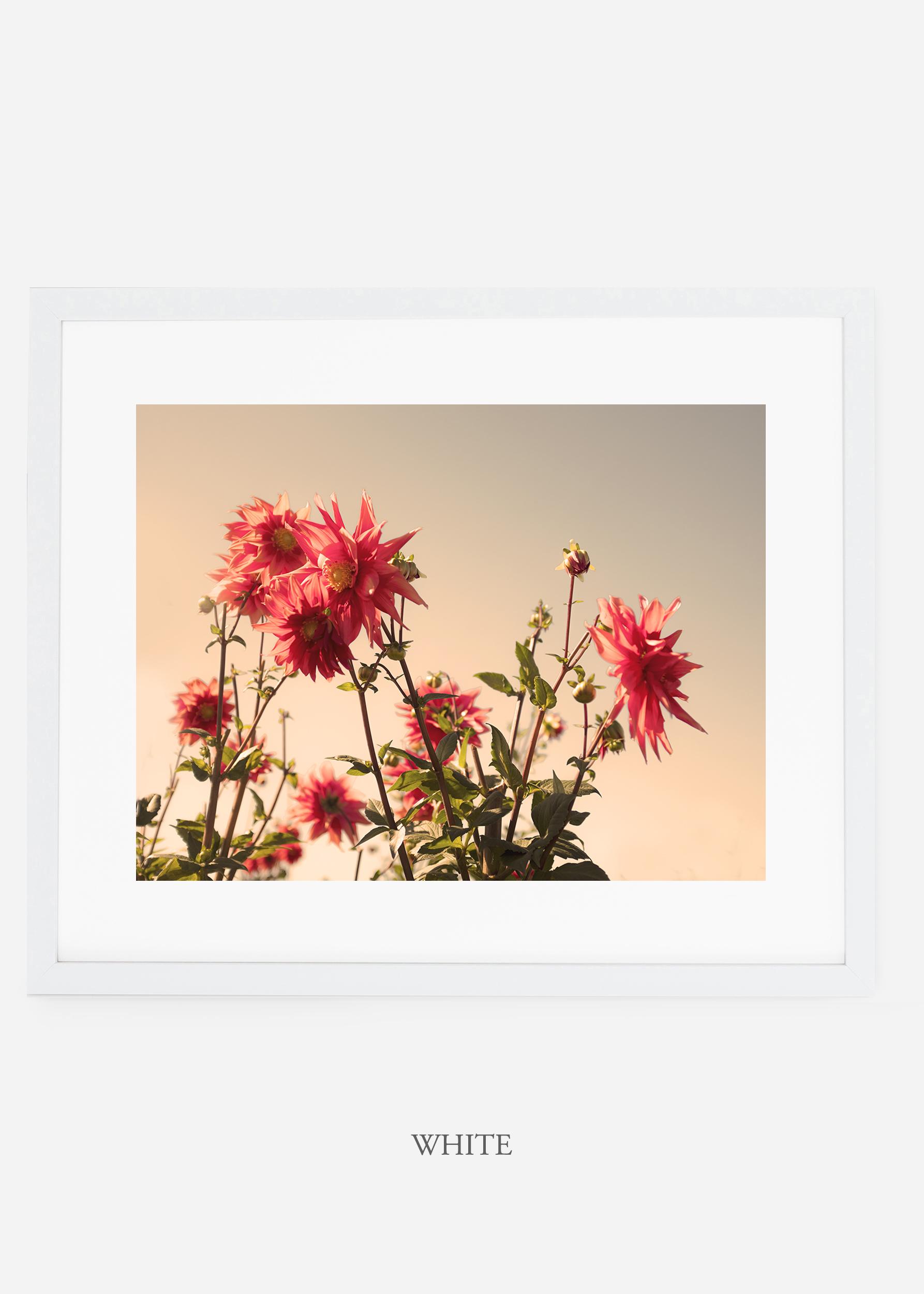 wilder-california-whiteframe-dahlia-9-minimal-botanical-print-art-interior-design.jpg