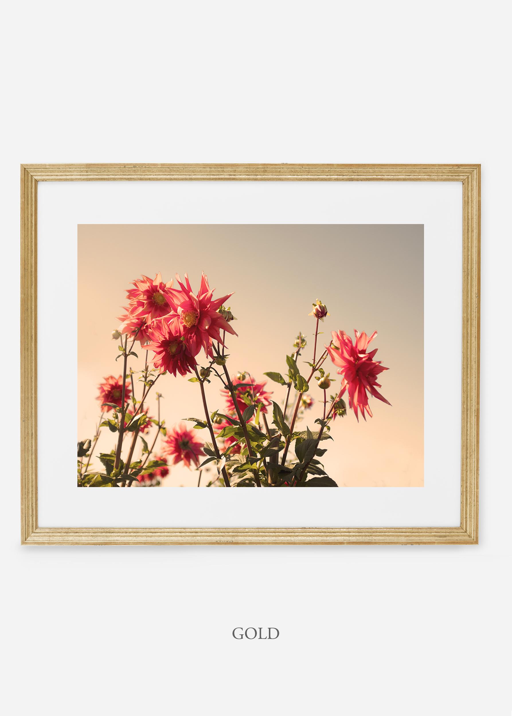 GoldFrame_DahliaNo.9_WilderCalifornia_Art_Floral_Homedecor_Prints_Dahlia_Botanical_Artwork_Interiordesign.jpg