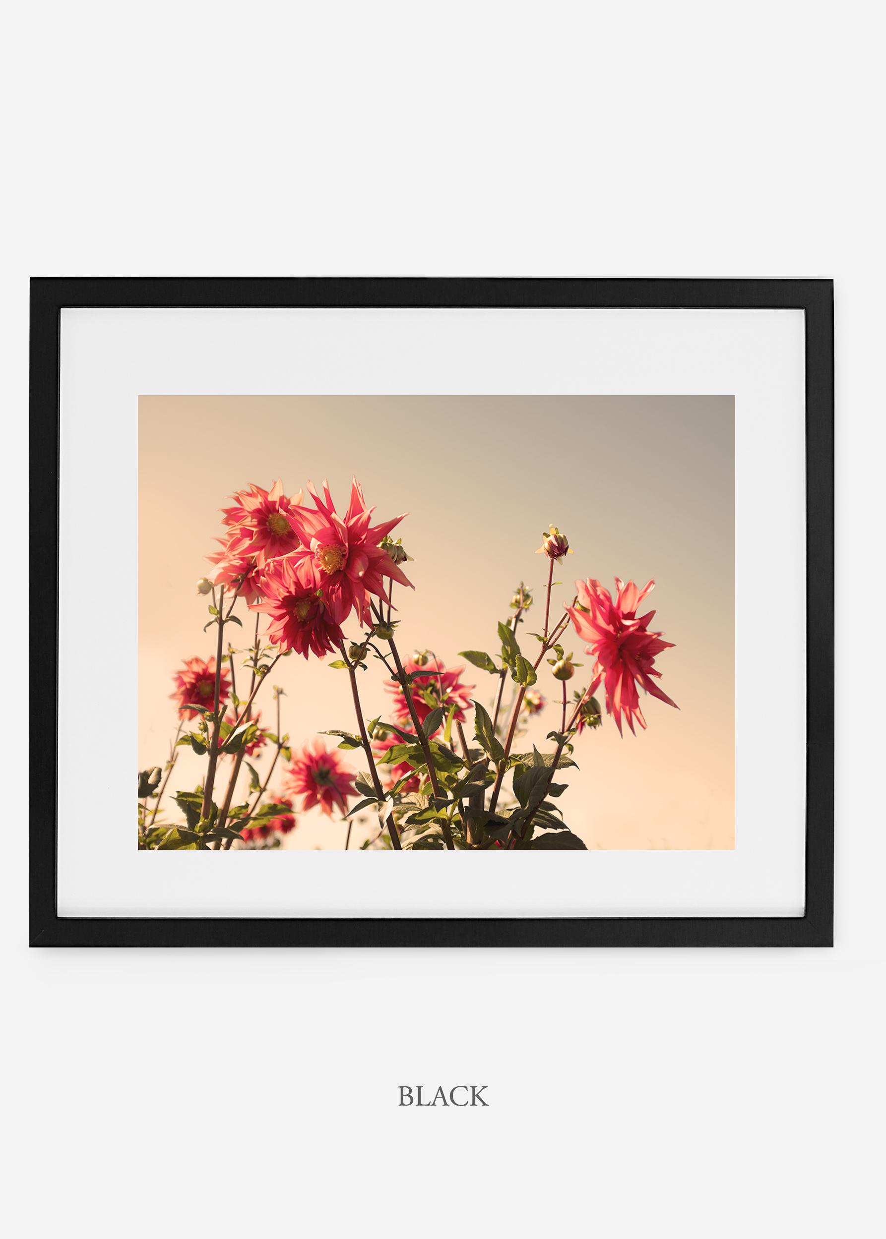 wilder-california-blackframe-dahlia-9-minimal-botanical-print-art-interior-design.jpg