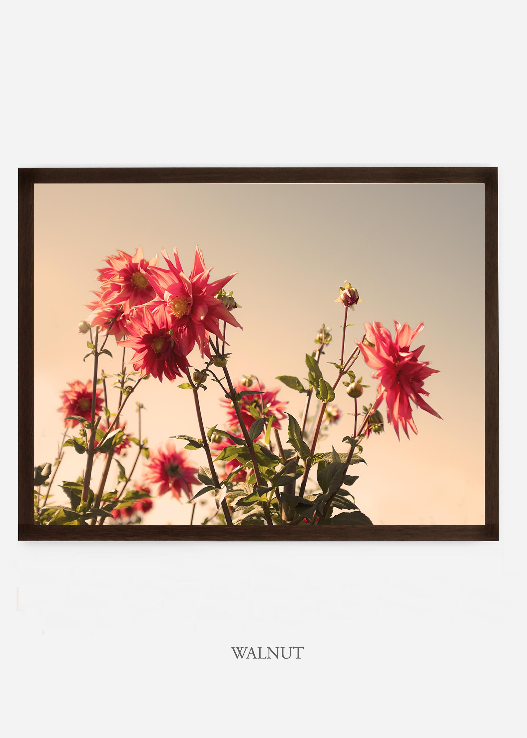 NoMat-DarkWalnutFrame-DahliaNo.9-Wilder-California-Art-Floral-Home-decor-Prints-Dahlia-Botanical-Artwork-Interior-design.jpg