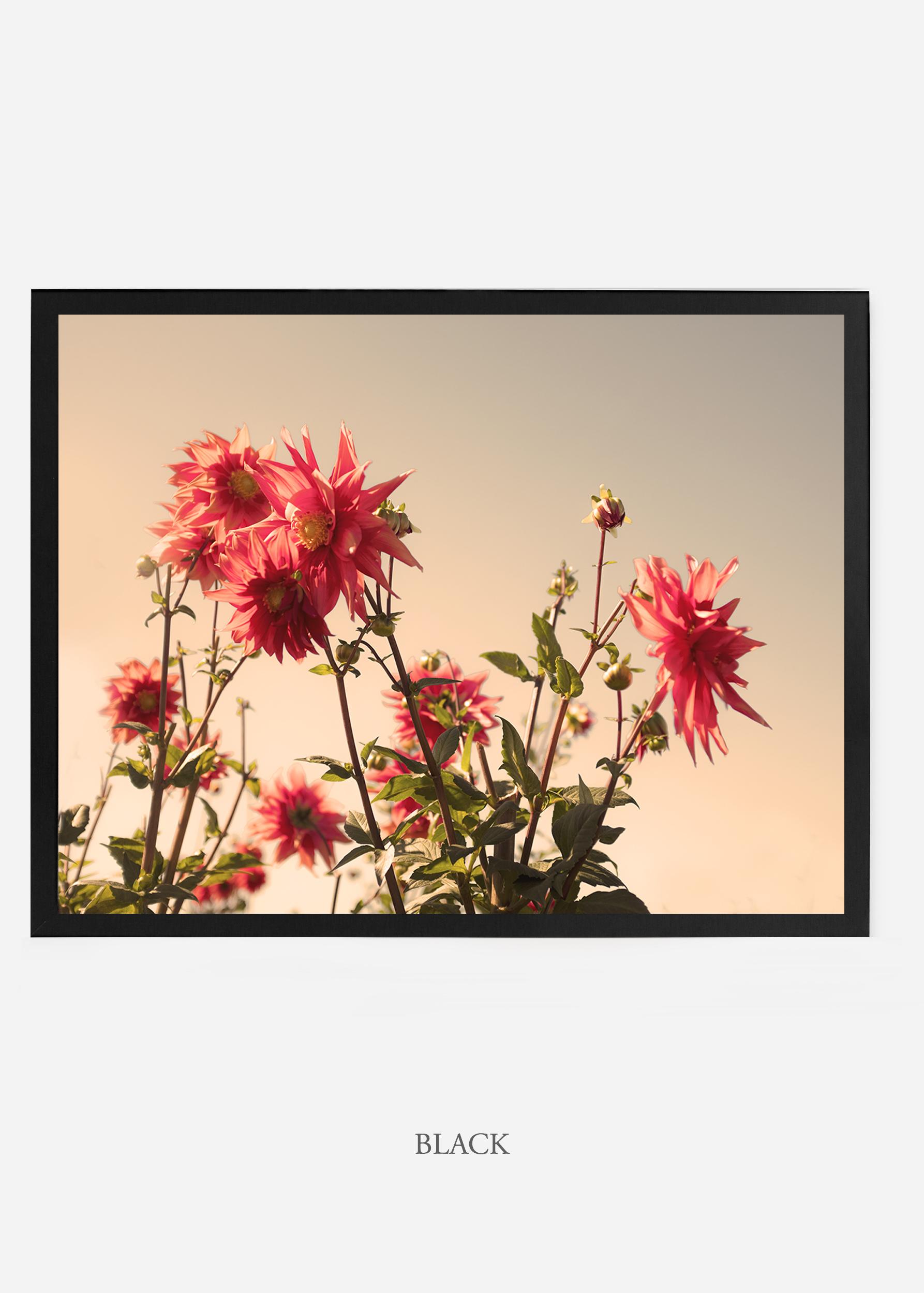 NoMat-BlackFrame-DahliaNo.9-Wilder-California-Art-Floral-Home-decor-Prints-Dahlia-Botanical-Artwork-Interior-design.jpg