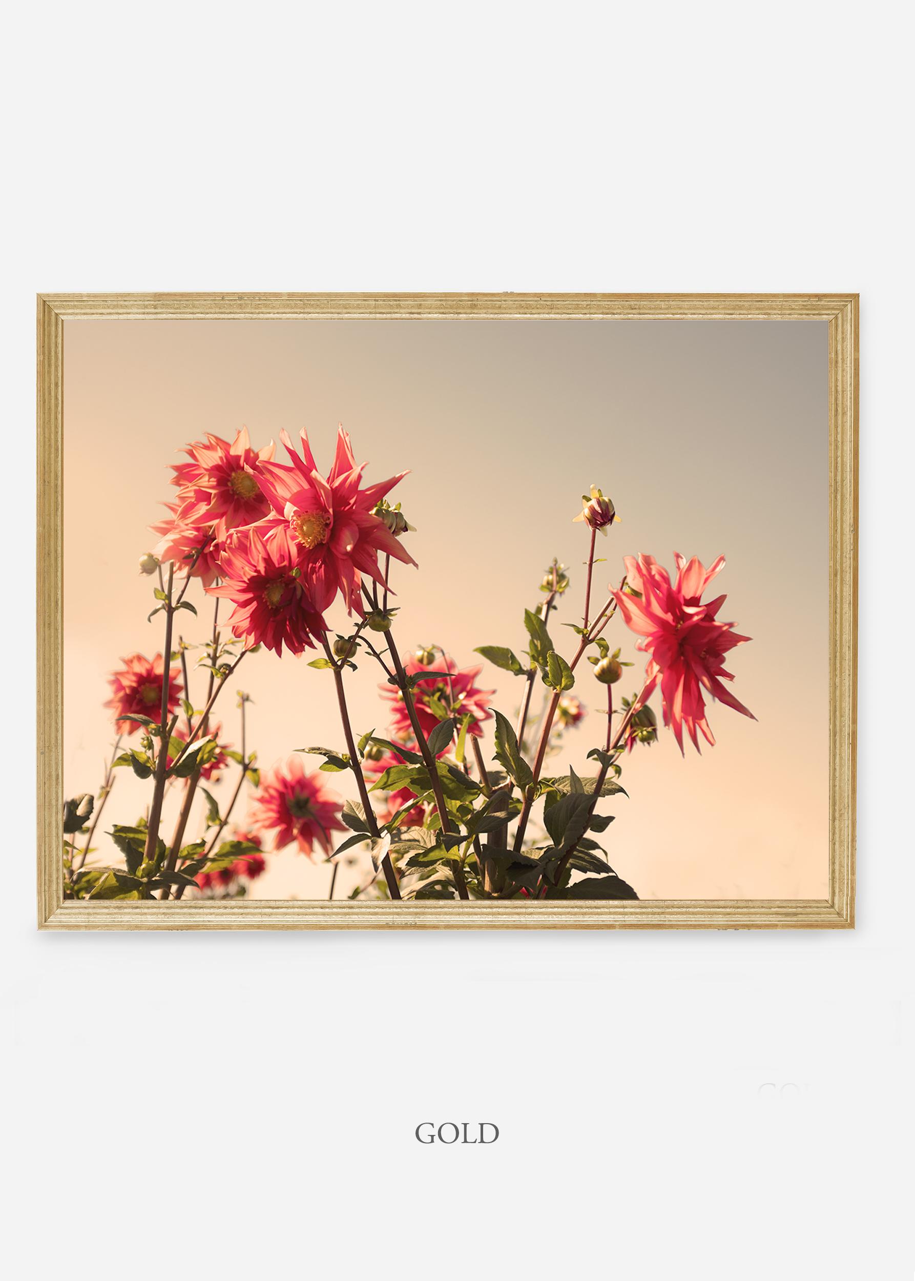 NoMat-Gold-Frame-DahliaNo.9-Wilder-California-Art-Floral-Home-decor-Prints-Dahlia-Botanical-Artwork-Interior-design.jpg