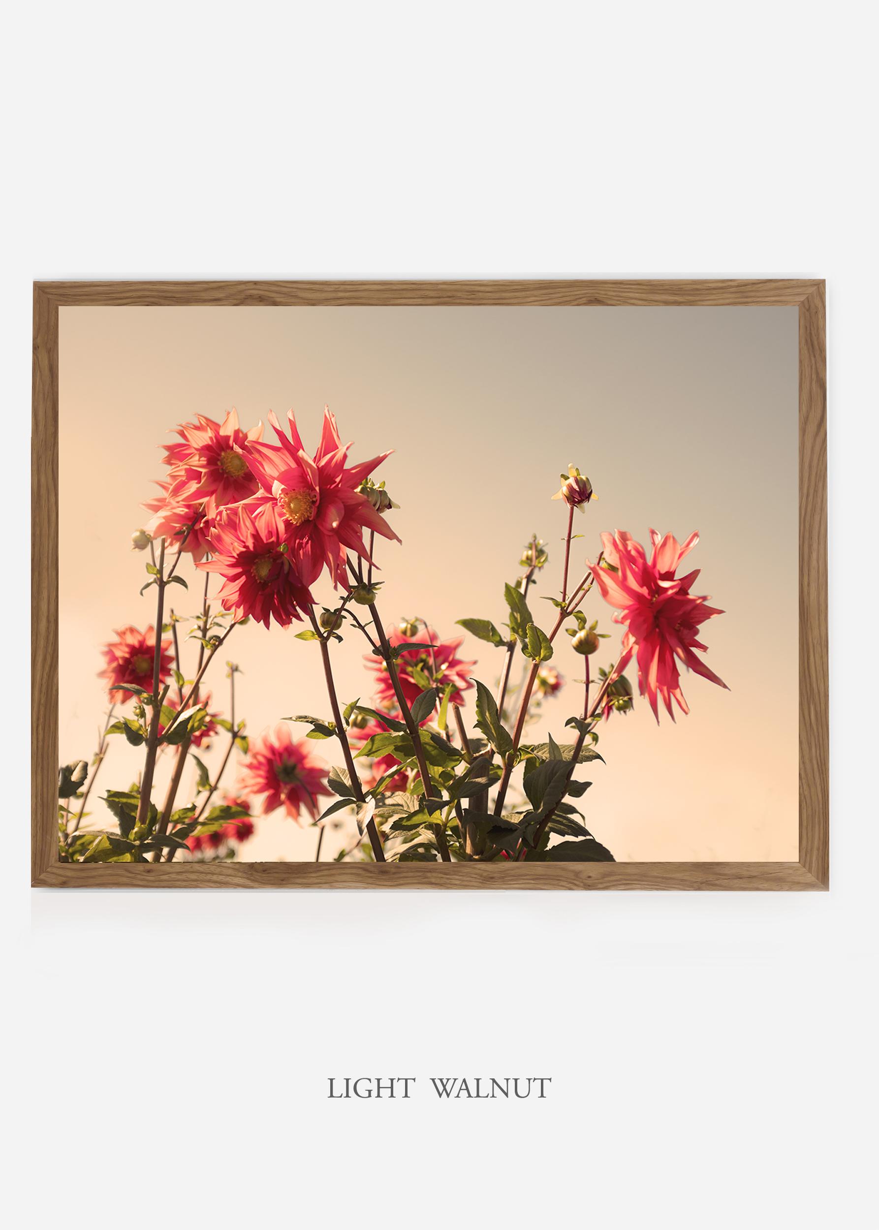 NoMat-LightWalnutFrame-DahliaNo.9-Wilder-California-Art-Floral-Home-decor-Prints-Dahlia-Botanical-Artwork-Interior-design.jpg