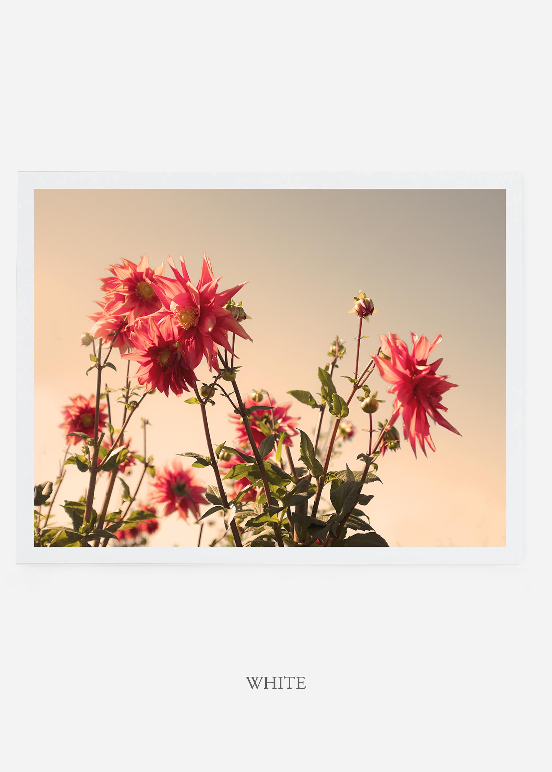 NoMat-WhiteFrame-DahliaNo.9-Wilder-California-Art-Floral-Home-decor-Prints-Dahlia-Botanical-Artwork-Interior-design.jpg