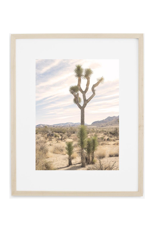 Joshua Tree No. 7