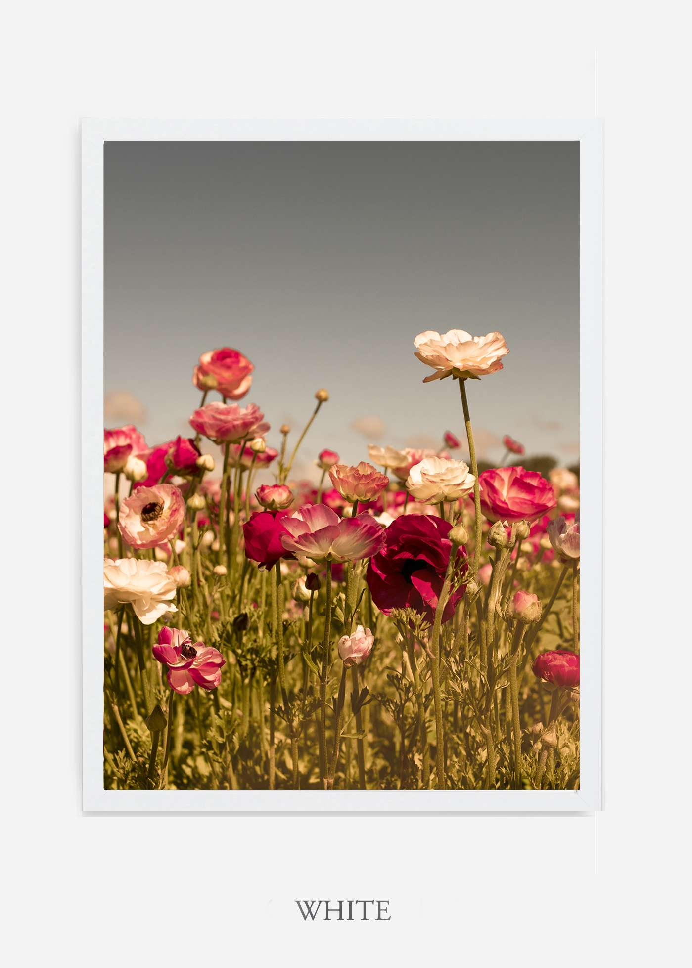 wilder-california-Floral-No.3-white-frame-no-mat-interior-design-botanical-print-art-floral-art.jpg