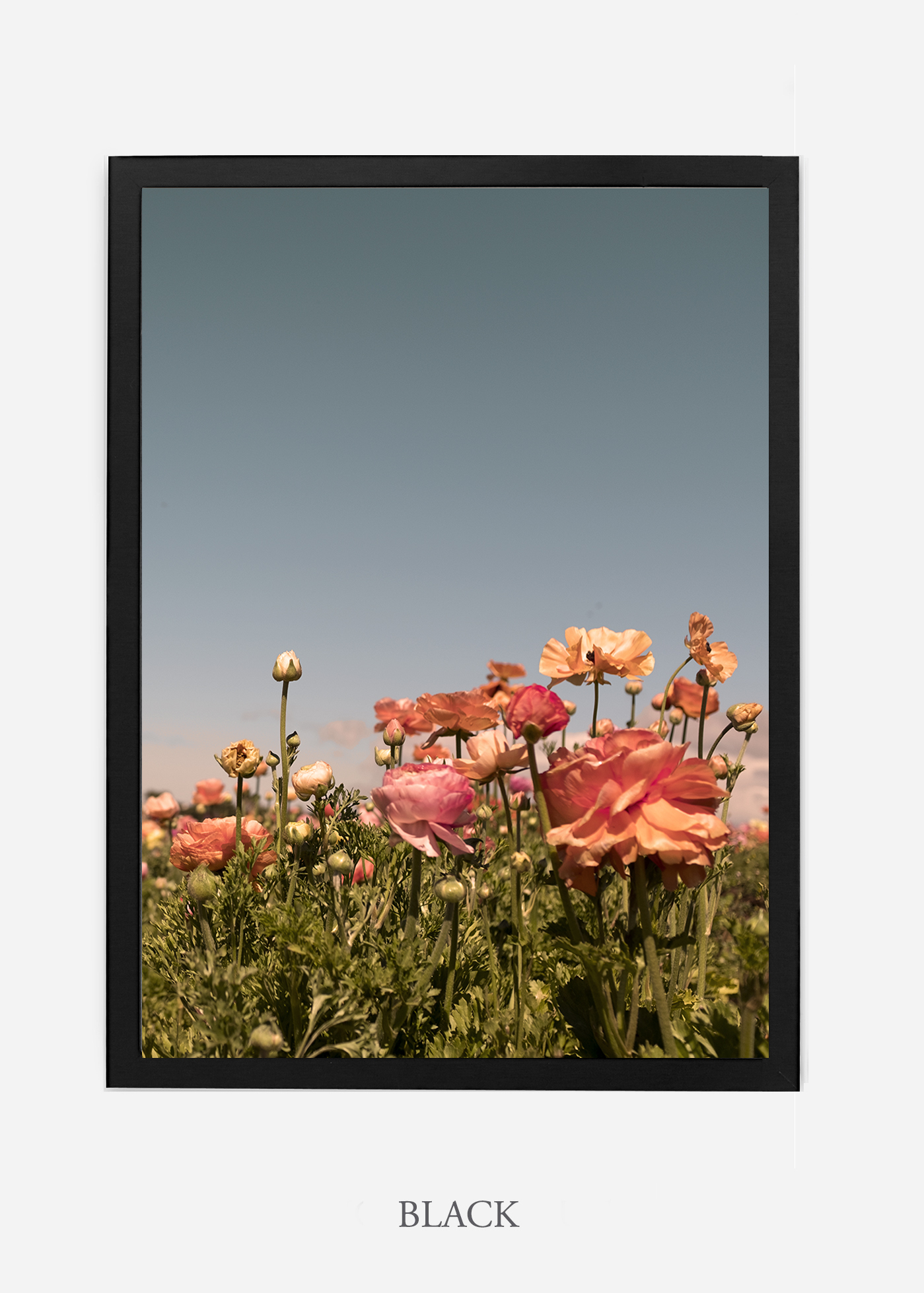 NoMat-Black-Frame-Floral-No-1-Wilder-California-Art-Floral-Home-decor-Prints-Dahlia-Botanical-Artwork-Interior-design.jpg