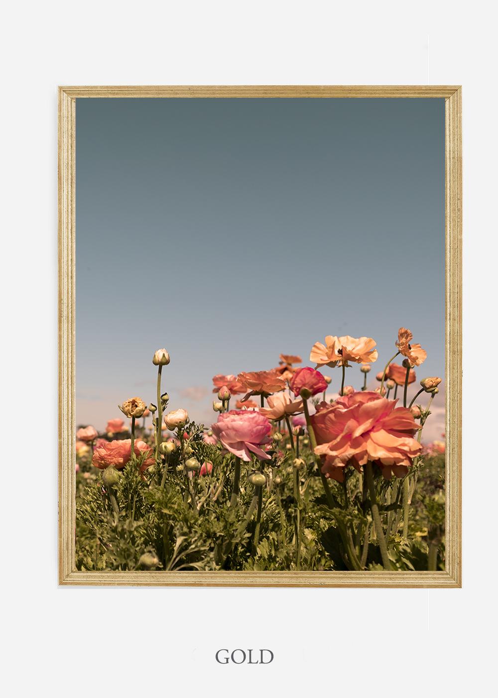 NoMat-Gold-Frame-Floral-No-1-Wilder-California-Art-Floral-Home-decor-Prints-Dahlia-Botanical-Artwork-Interior-design.jpg