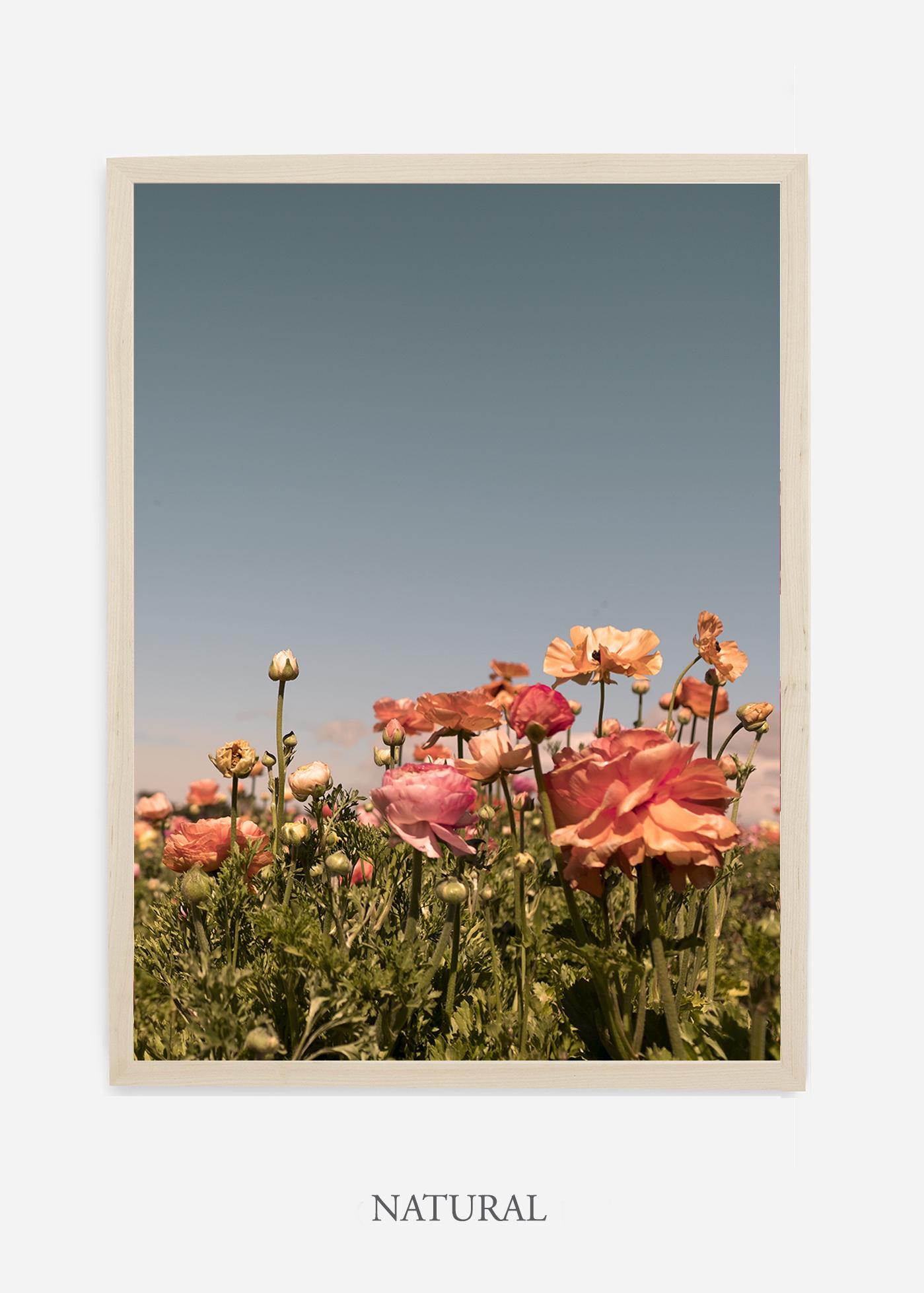 NoMat-Natural-Frame-Floral-No-1-Wilder-California-Art-Floral-Home-decor-Prints-Dahlia-Botanical-Artwork-Interior-design.jpg