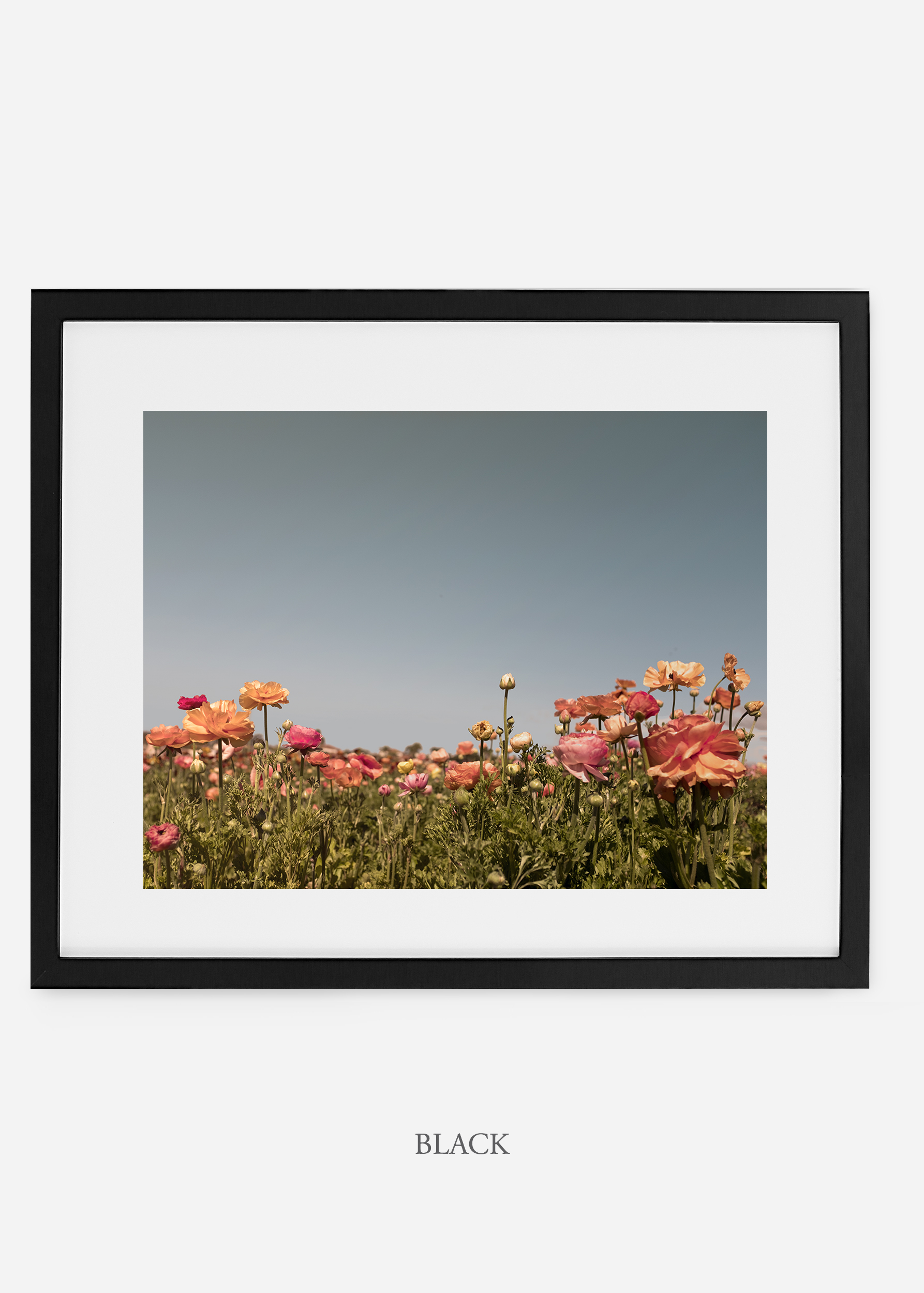 wilder-california-black-frame-flora-5-minimal-botanical-print-art-interior-design.jpg