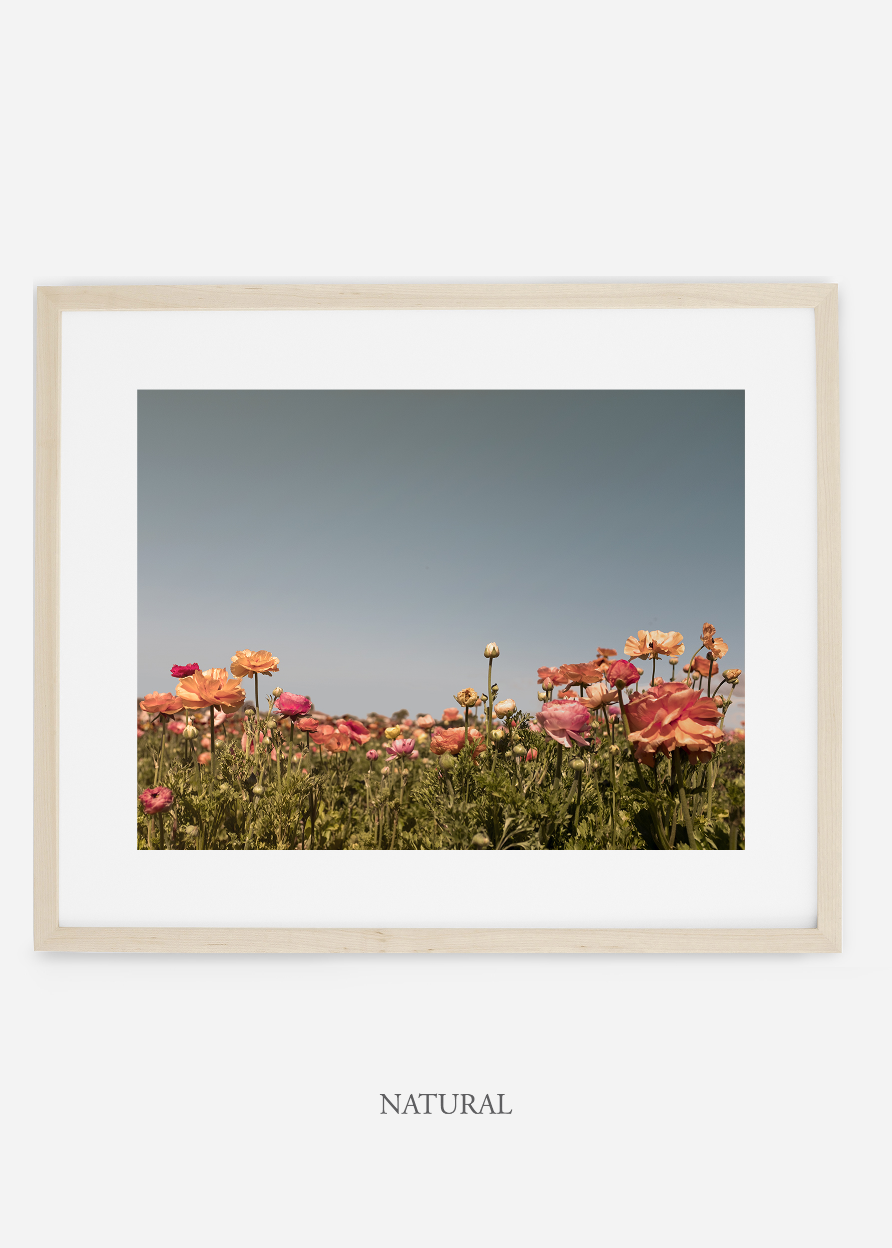 wilder-california-natural-frame-flora-5--minimal-botanical-print-art-interior-design.jpg