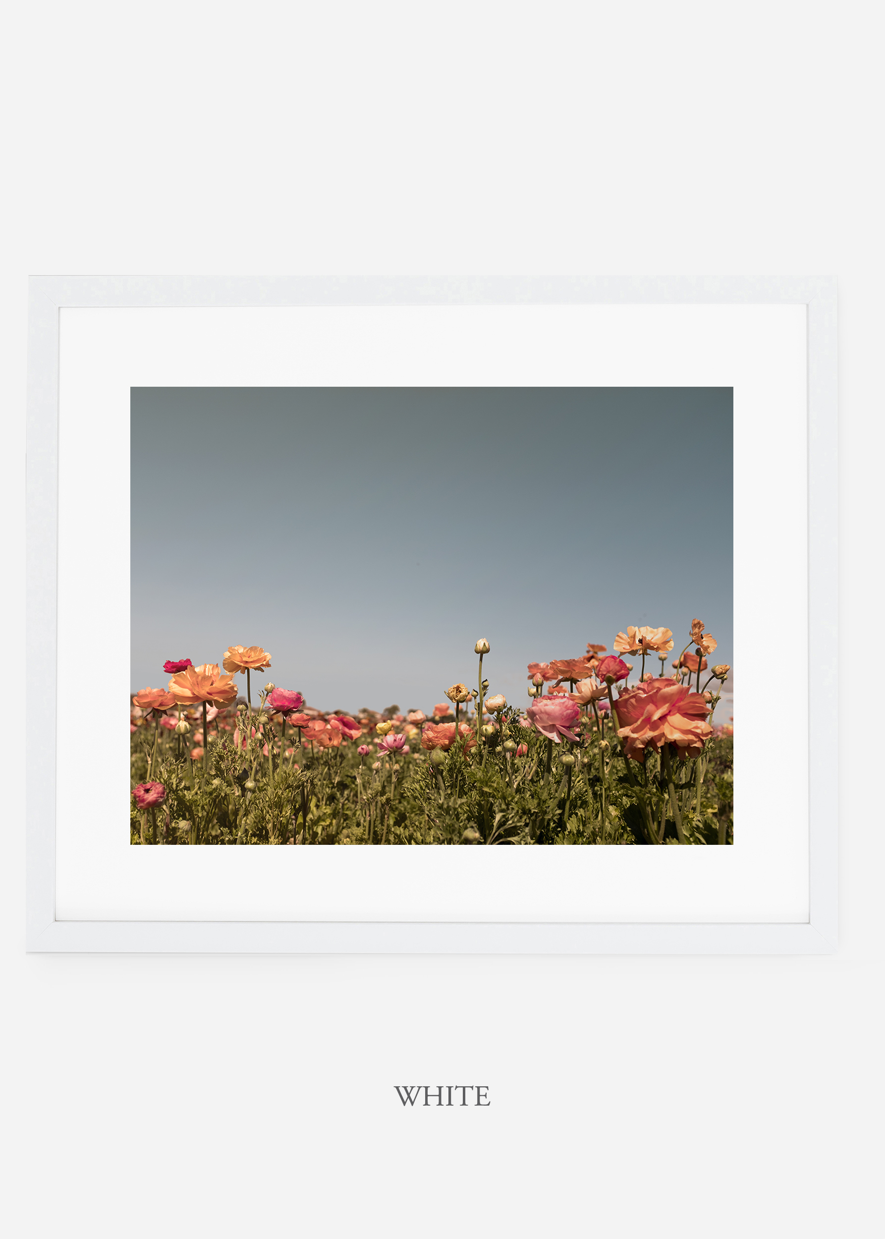 wilder-california-white-frame-flora-5-minimal-botanical-print-art-interior-design.jpg