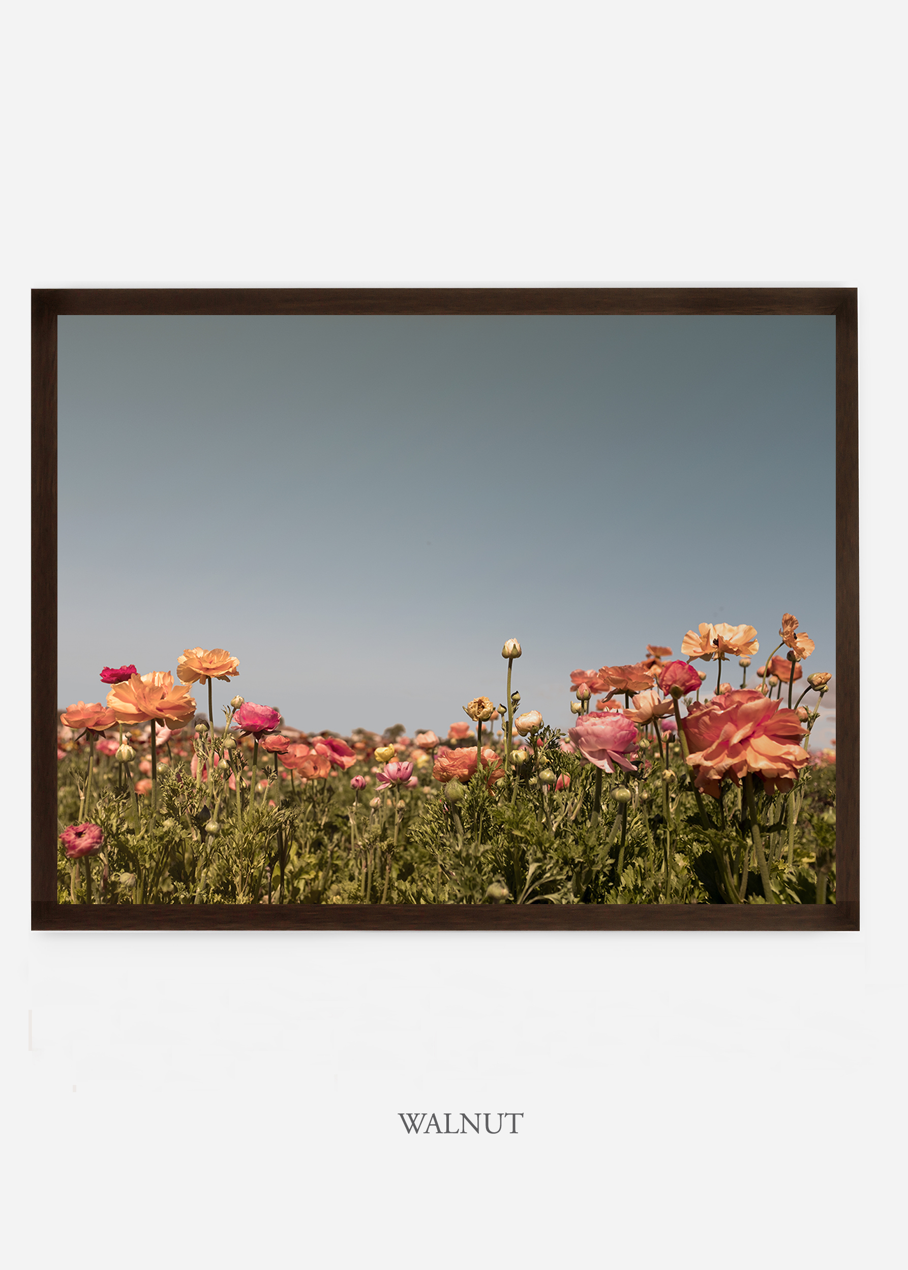NoMat-DarkWalnutFrame-DahliaNo.5-Wilder-California-Art-Floral-Home-decor-Prints-Dahlia-Botanical-Artwork-Interior-design.jpg