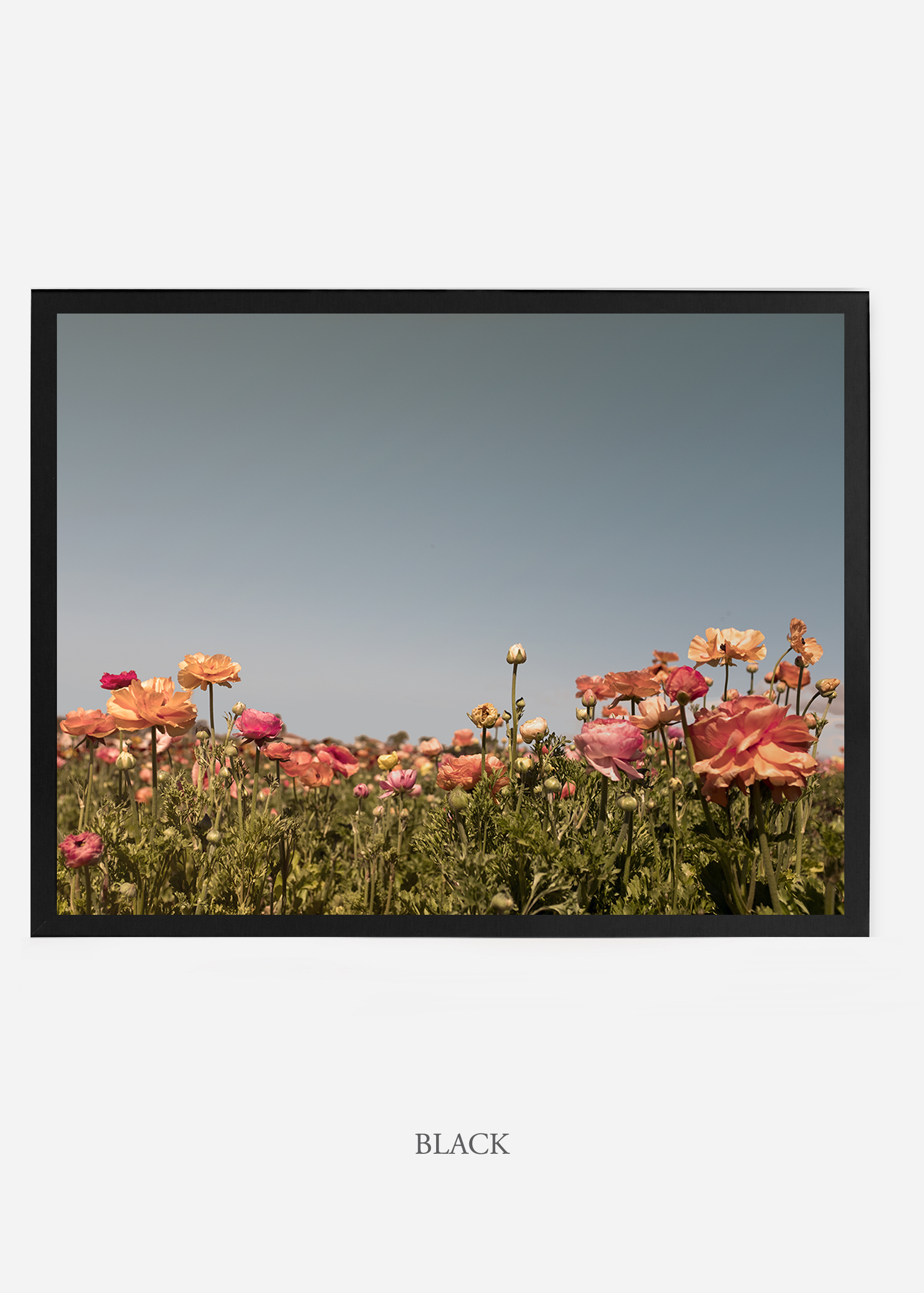 NoMat-BlackFrame-flora-5-Wilder-California-Art-Floral-Home-decor-Prints-Dahlia-Botanical-Artwork-Interior-design.jpg
