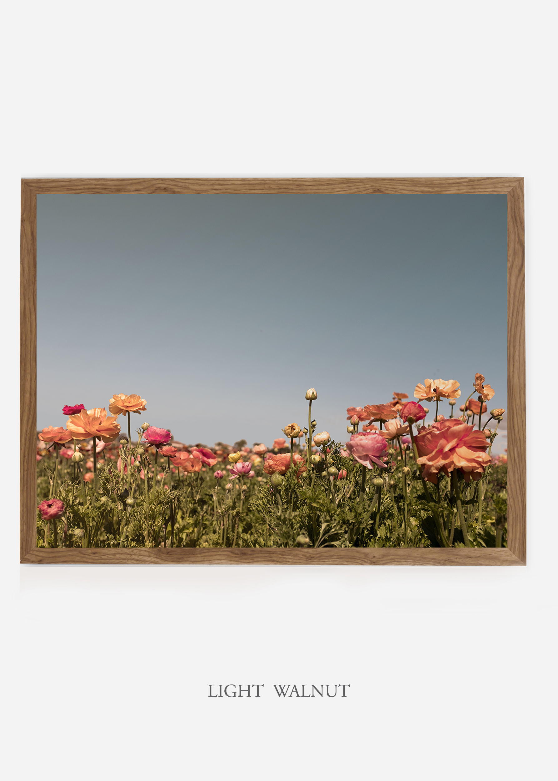 NoMat-LightWalnutFrame-DahliaNo.5-Wilder-California-Art-Floral-Home-decor-Prints-Dahlia-Botanical-Artwork-Interior-design.jpg