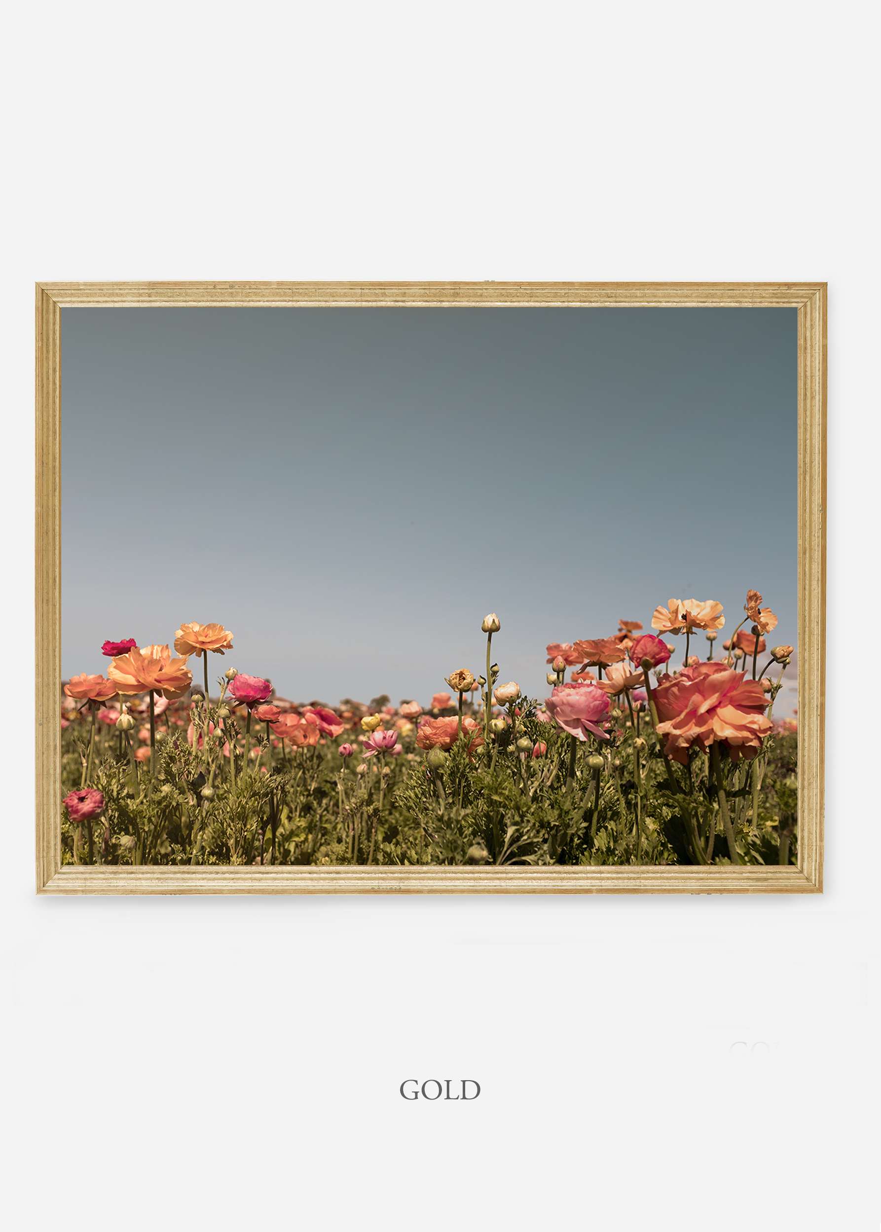 NoMat-GoldFrame-Floral-5-Wilder-California-Art-Floral-Home-decor-Prints-Dahlia-Botanical-Artwork-Interior-design.jpg