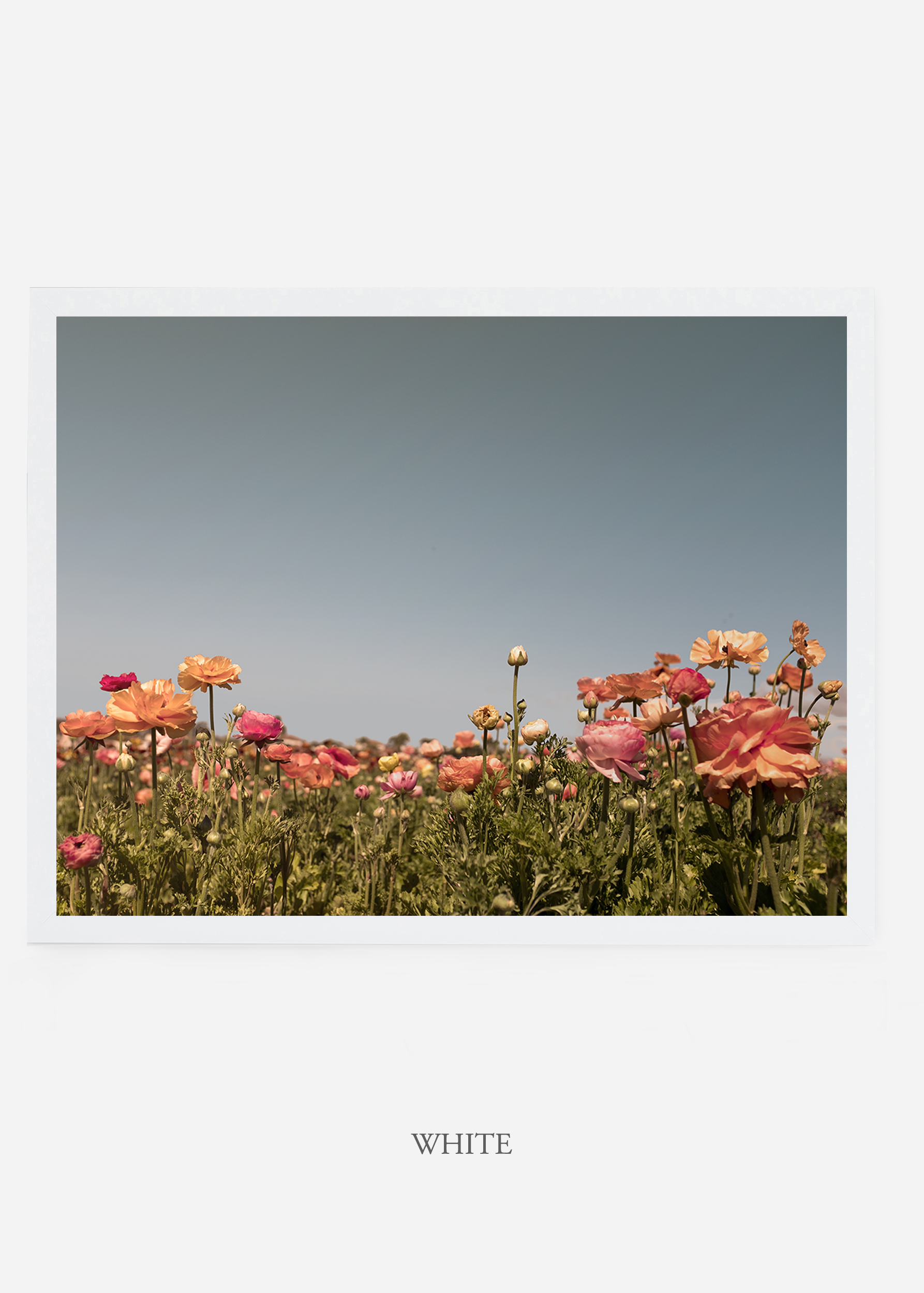 NoMat-WhiteFrame-Flora-5-Wilder-California-Art-Floral-Home-decor-Prints-Dahlia-Botanical-Artwork-Interior-design.jpg