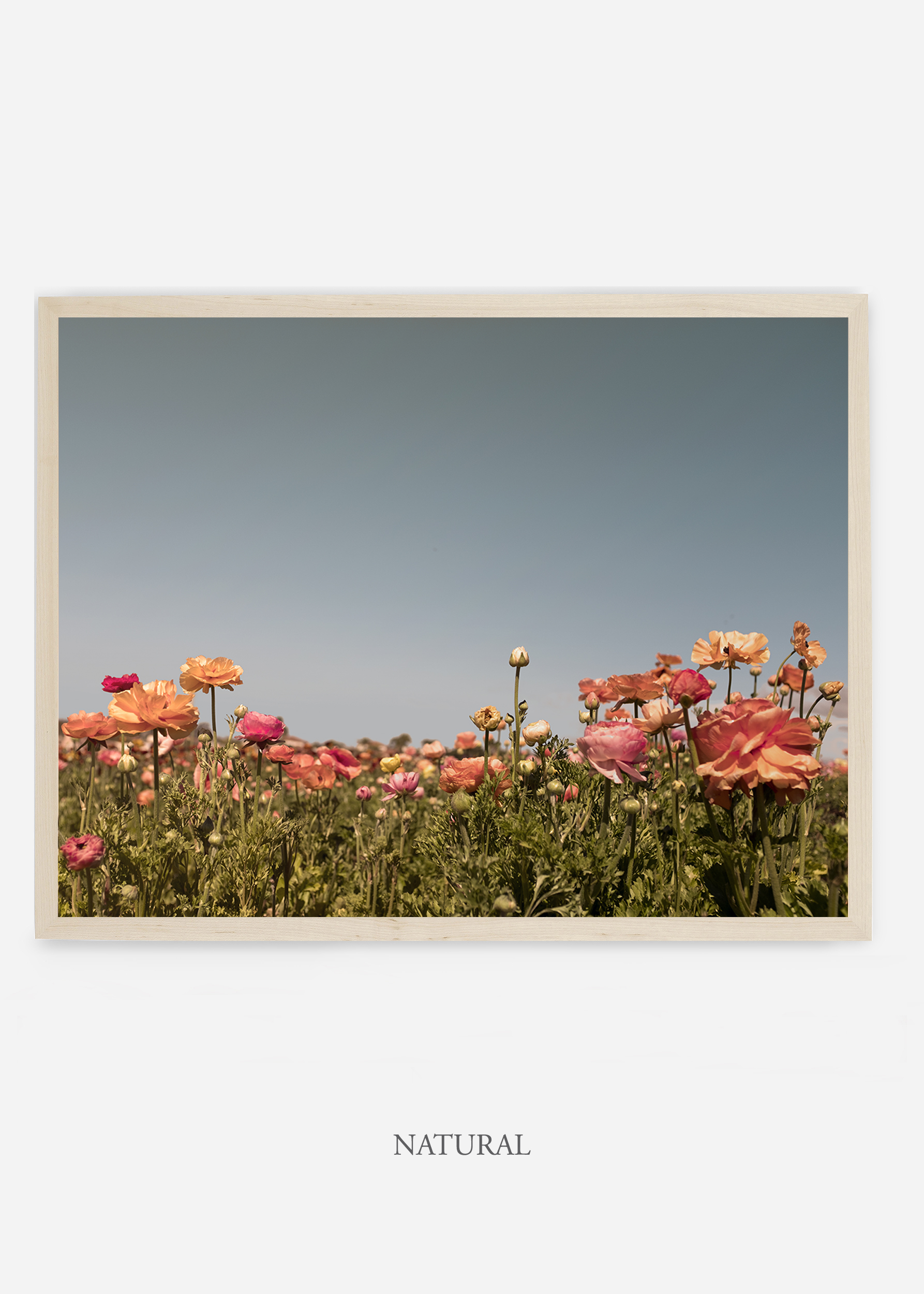NoMat-Natural-Frame-Floral-5--Wilder-California-Art-Floral-Home-decor-Prints-Dahlia-Botanical-Artwork-Interior-design.jpg