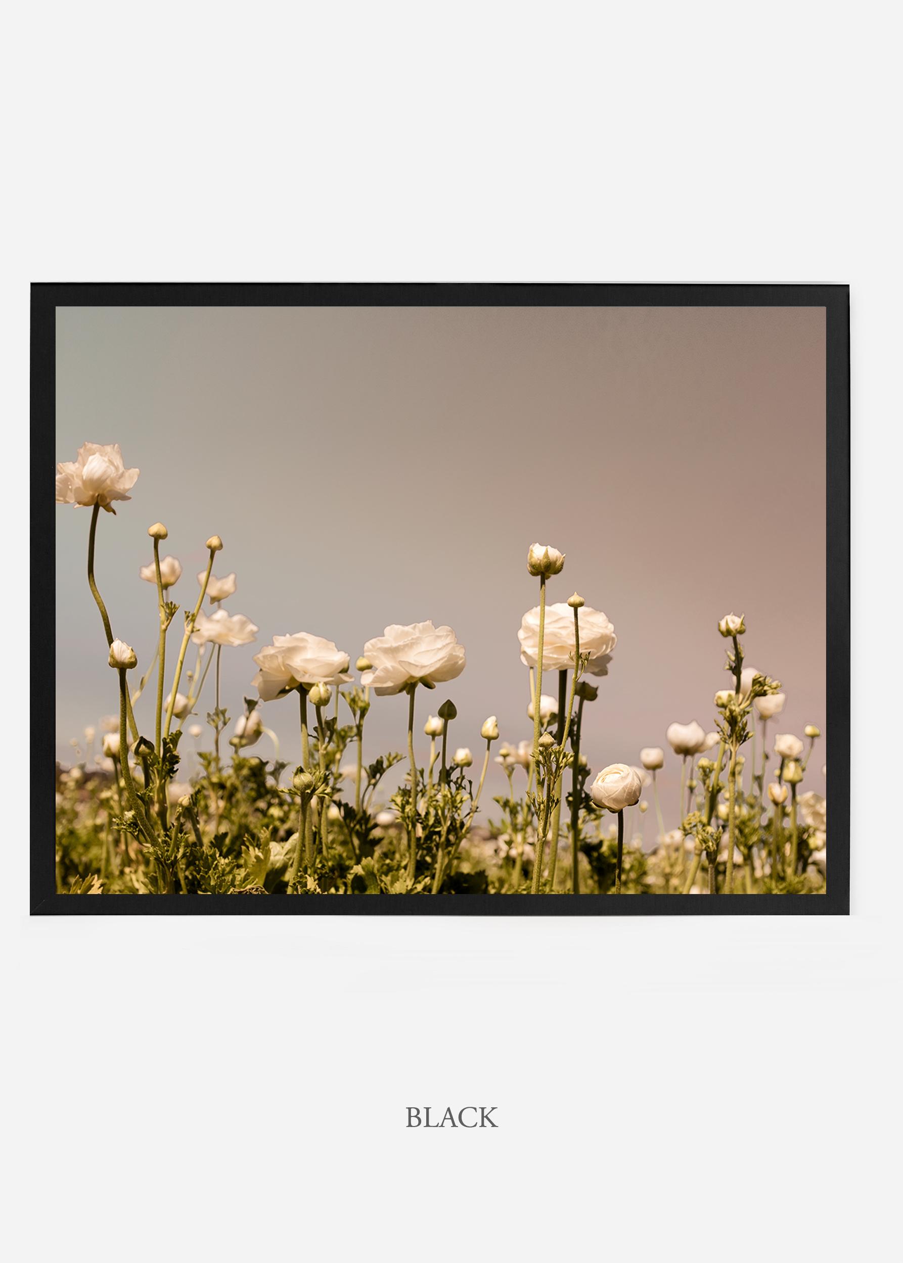 NoMat-BlackFrame-flora-6-Wilder-California-Art-Floral-Home-decor-Prints-Dahlia-Botanical-Artwork-Interior-design.jpg