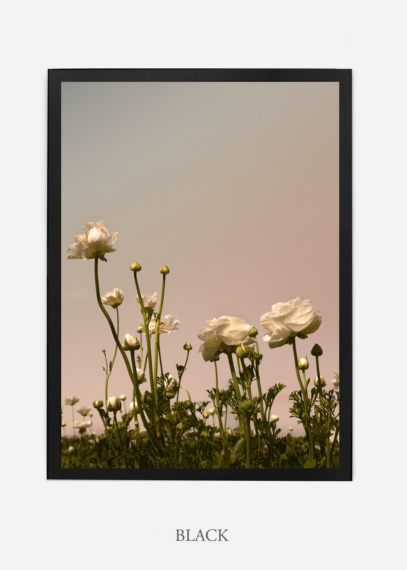 NoMat-Black-Frame-Floral-No-7-Wilder-California-Art-Floral-Home-decor-Prints-Dahlia-Botanical-Artwork-Interior-design.jpg