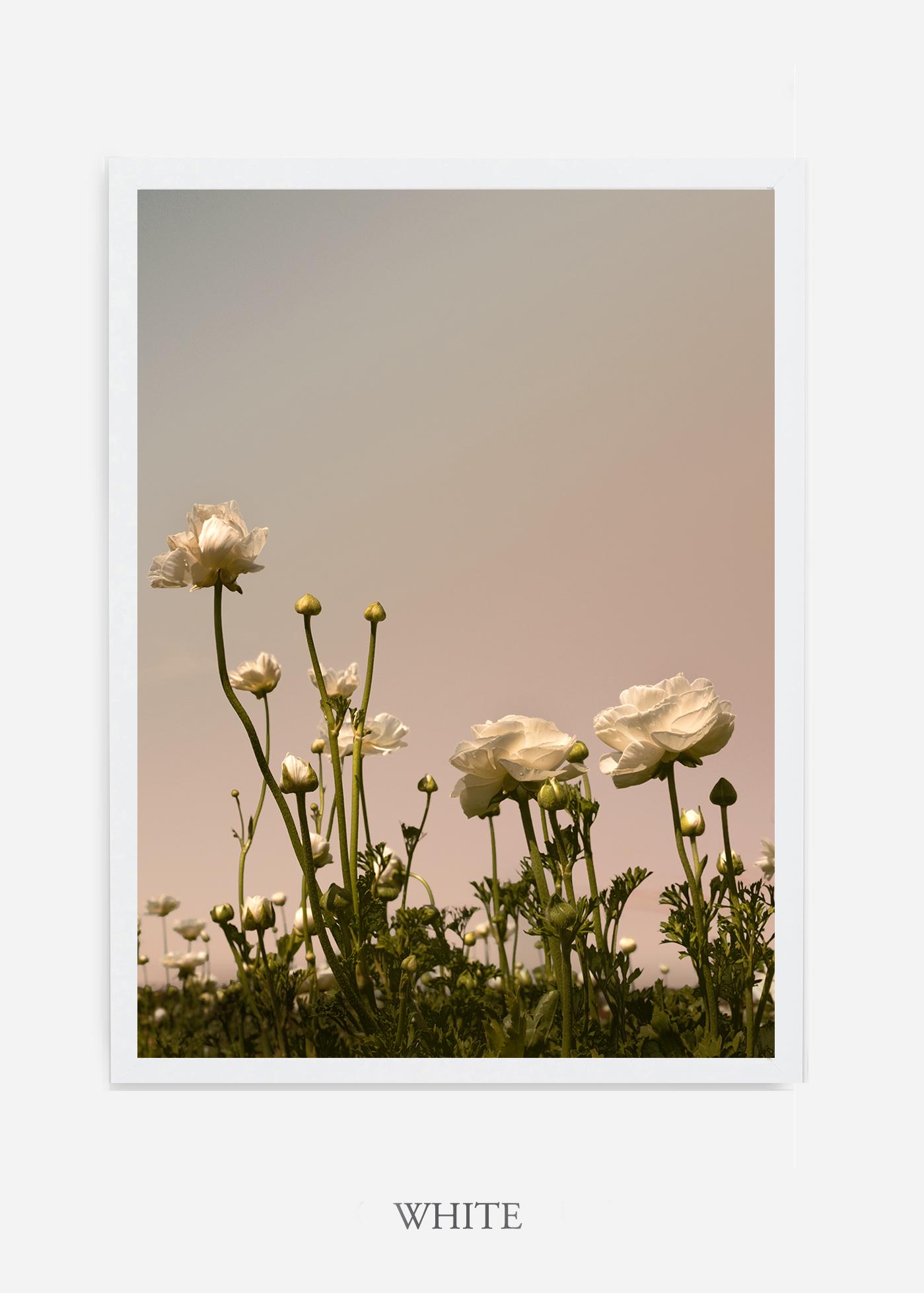 NoMat-White-Frame-Floral-No-7-Wilder-California-Art-Floral-Home-decor-Prints-Dahlia-Botanical-Artwork-Interior-design.jpg