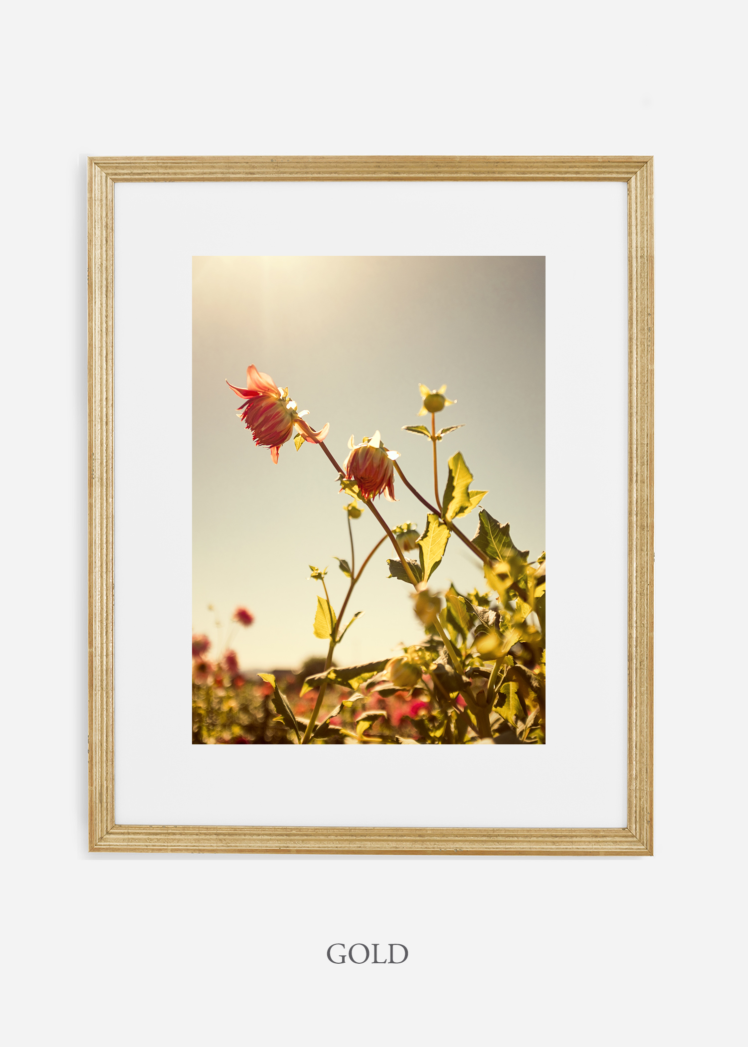 flora-no-10-gold-mat-custom-frame-dahlia-print-floral-print-floral-art-wilder-california-botanical-prints-home-decor-design-prints-print-shop.jpg