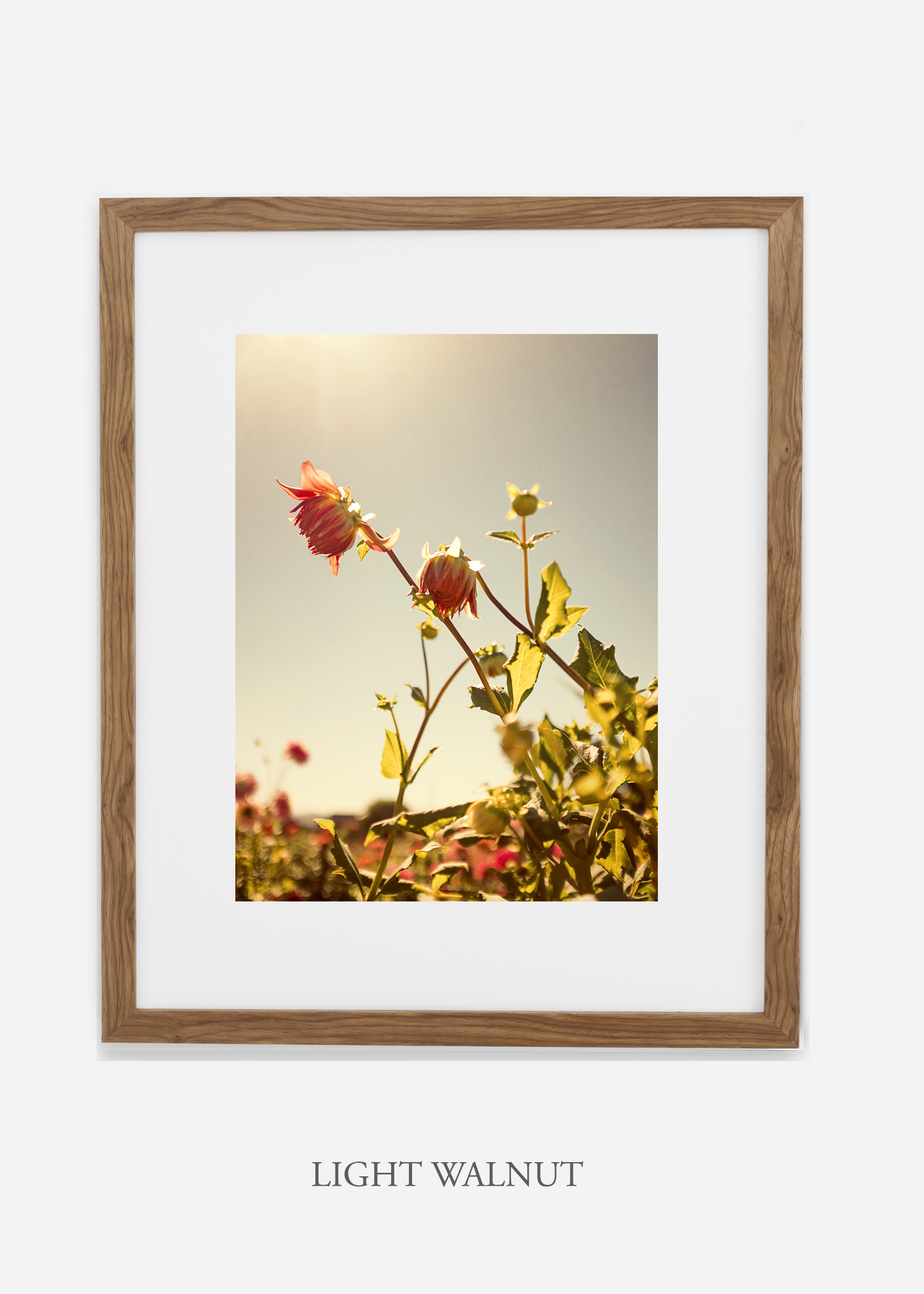flora-no-10-light-walnut-mat-custom-frame-dahlia-print-floral-print-floral-art-wilder-california-botanical-prints-home-decor-design-prints-print-shop.jpg