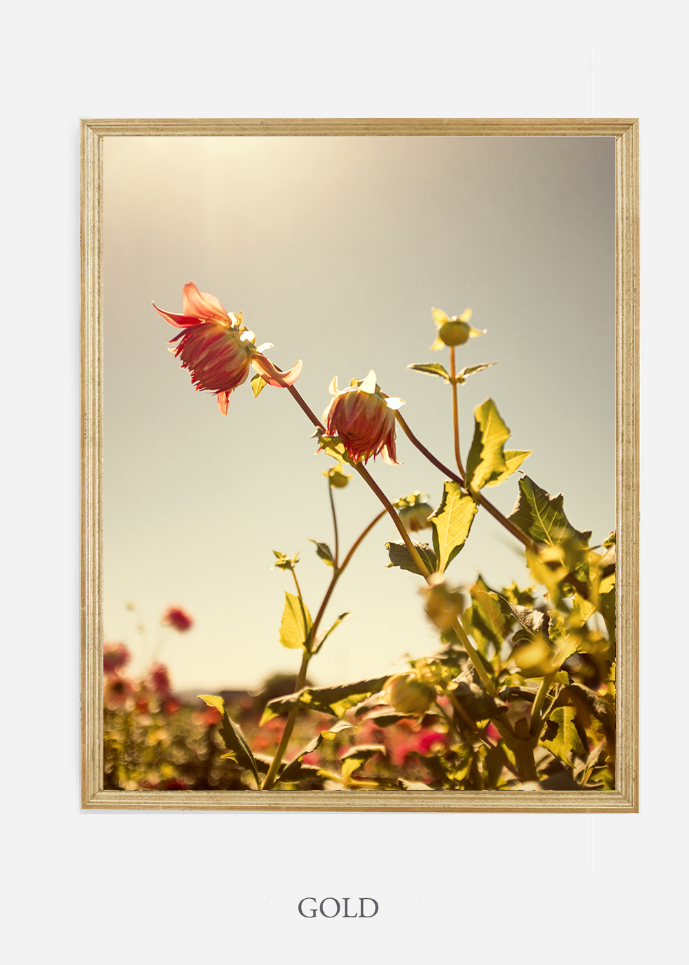 flora-no-10-gold-custom-frame-dahlia-print-floral-print-floral-art-wilder-california-botanical-prints-home-decor-design-prints-print-shop.jpg
