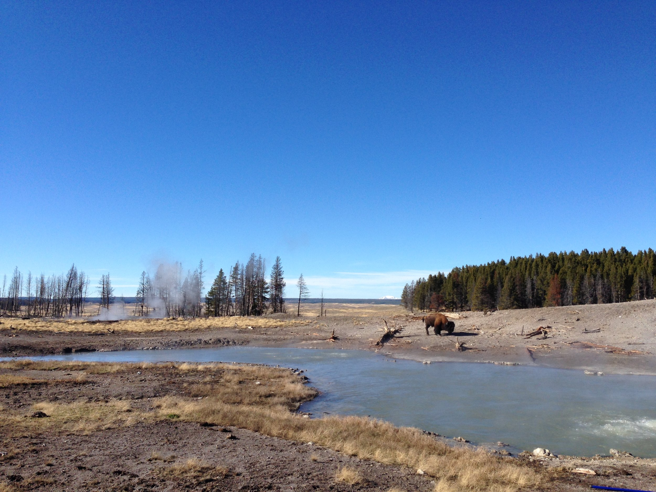 Figure 8 Spring and a bison
