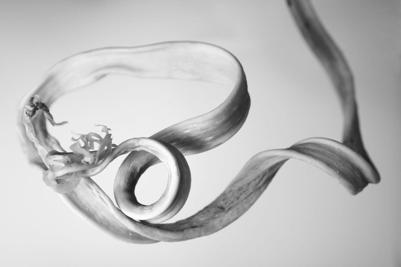 seaweedspiral.jpg