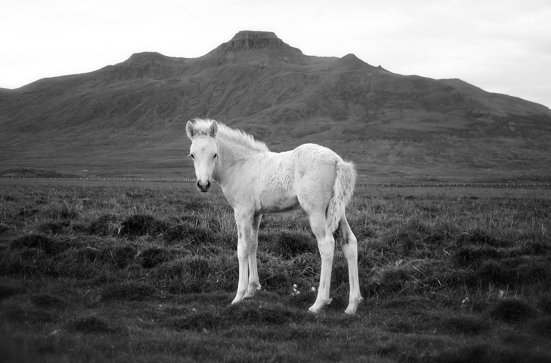 PonySpakonufell.jpg
