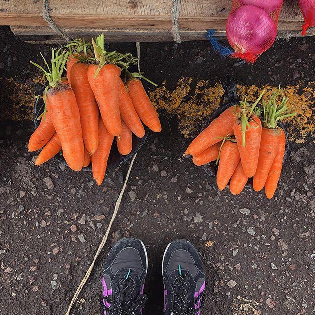 Cutest Carrots Ever #ofelia #market #carrots #mercado #quito #ecuador #fromwhereistand