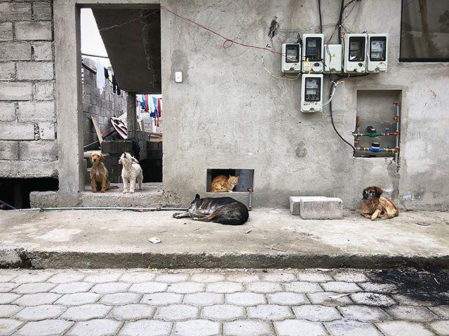Quito, Ecuador #ecuador #🇪🇨 #streetscene #quito #dogsofinstagram #dogs