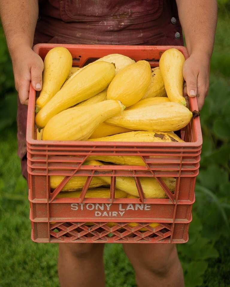 2019 was a great year for Summer Squash!