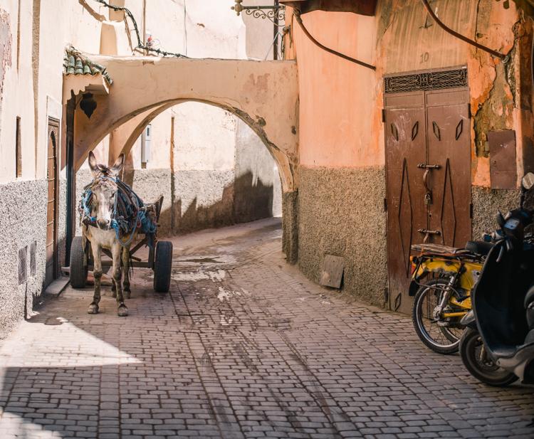 marrakech morocco-14.jpg