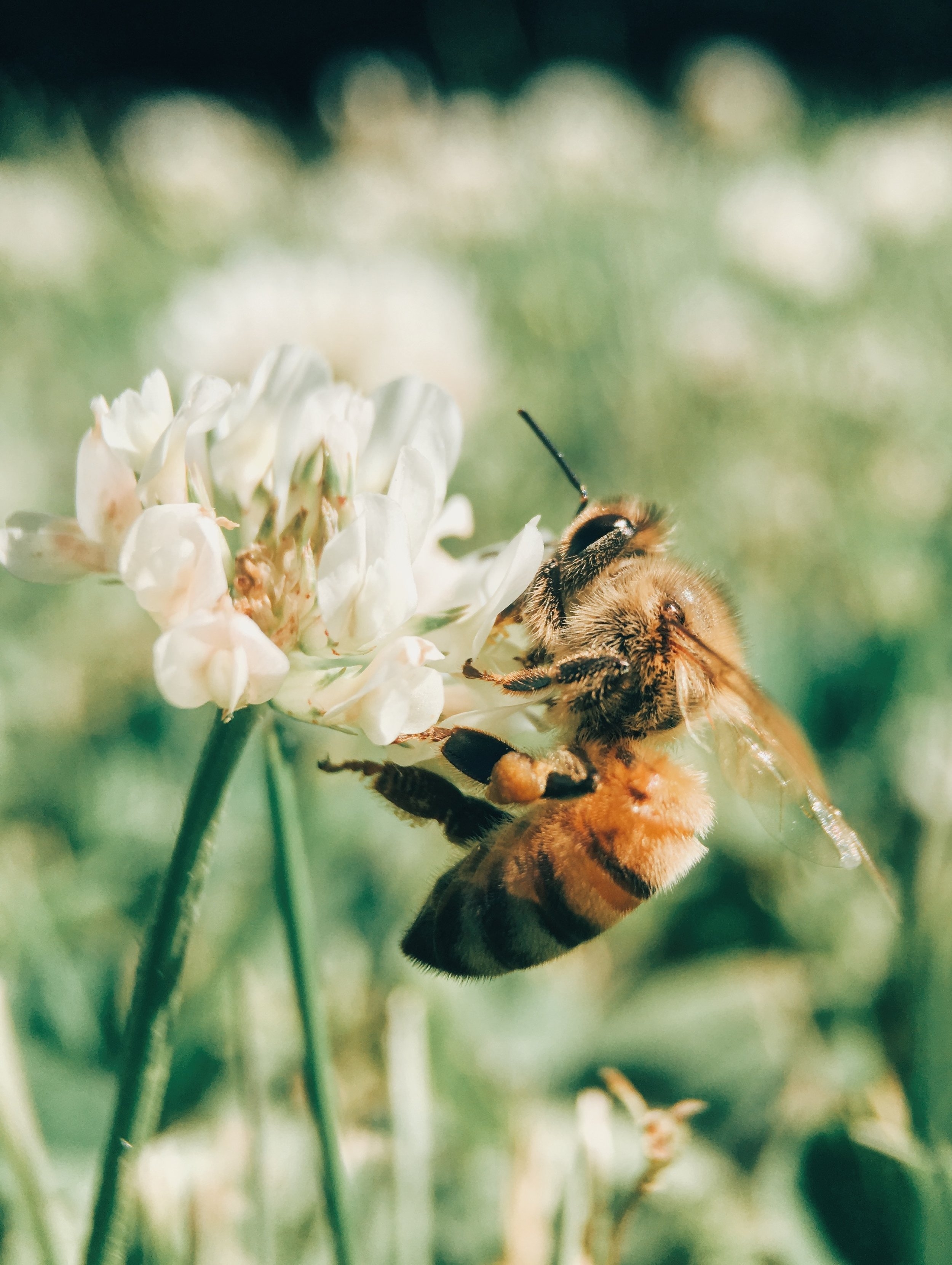 Nordic Honey_Five Easy Ways You Can Help Save the Bees This Summer_2.jpg