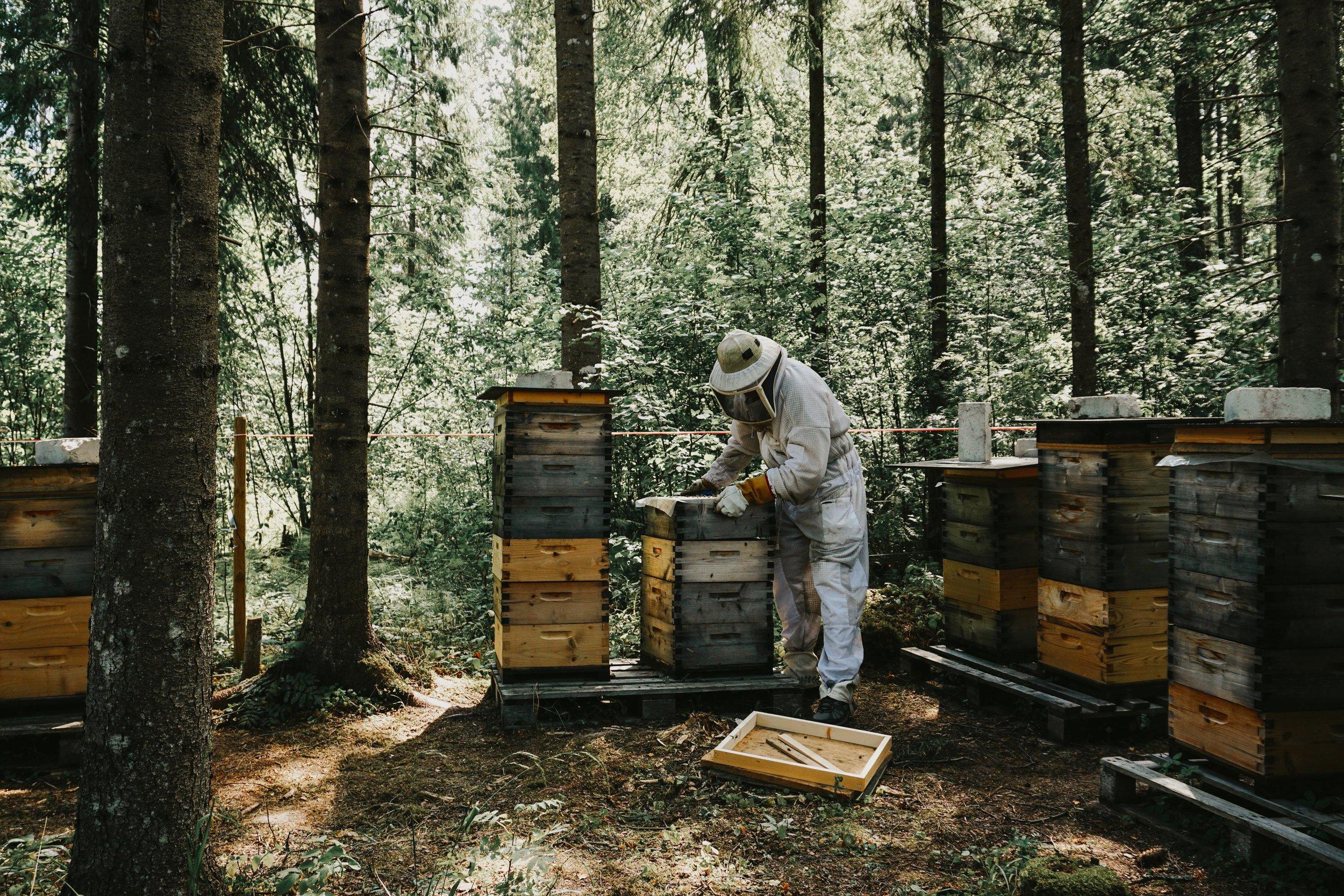 beekeeper-beehive-apiary.jpeg