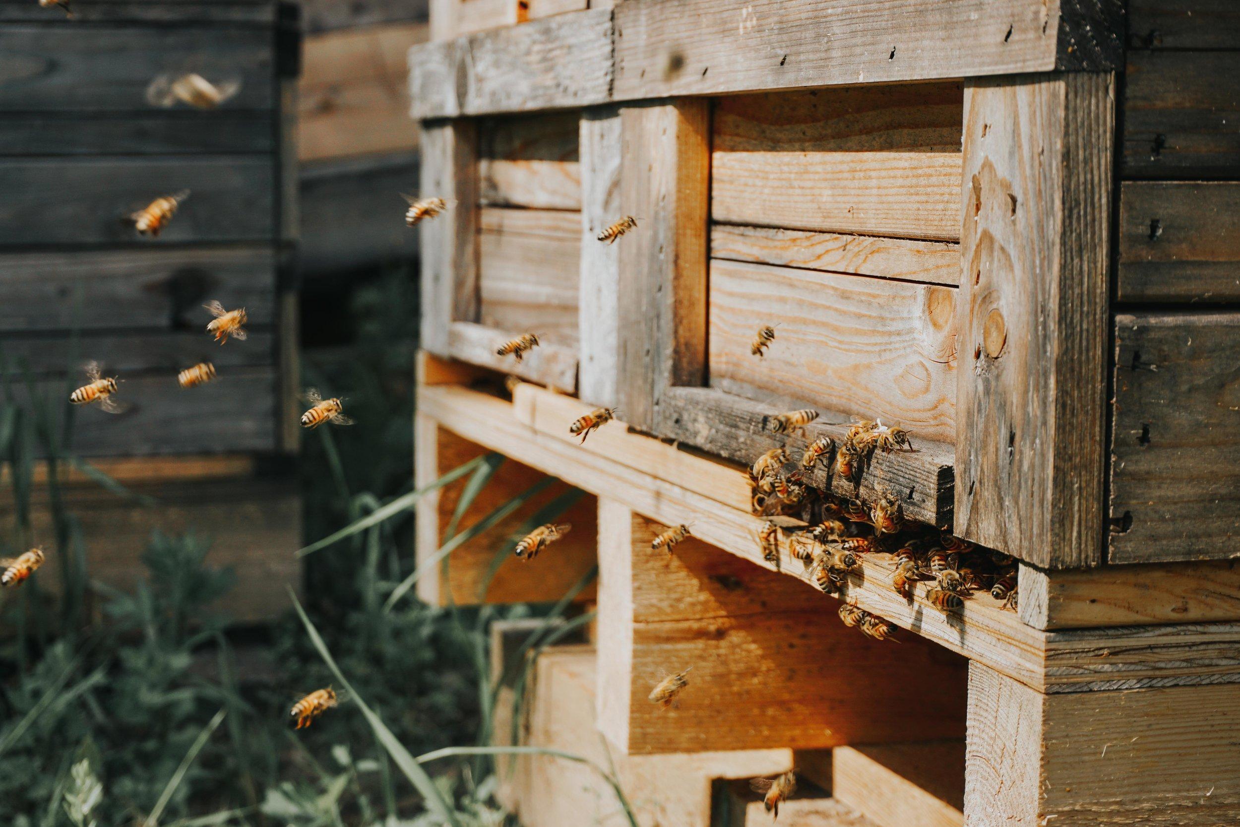 honeybees-beehive.jpg