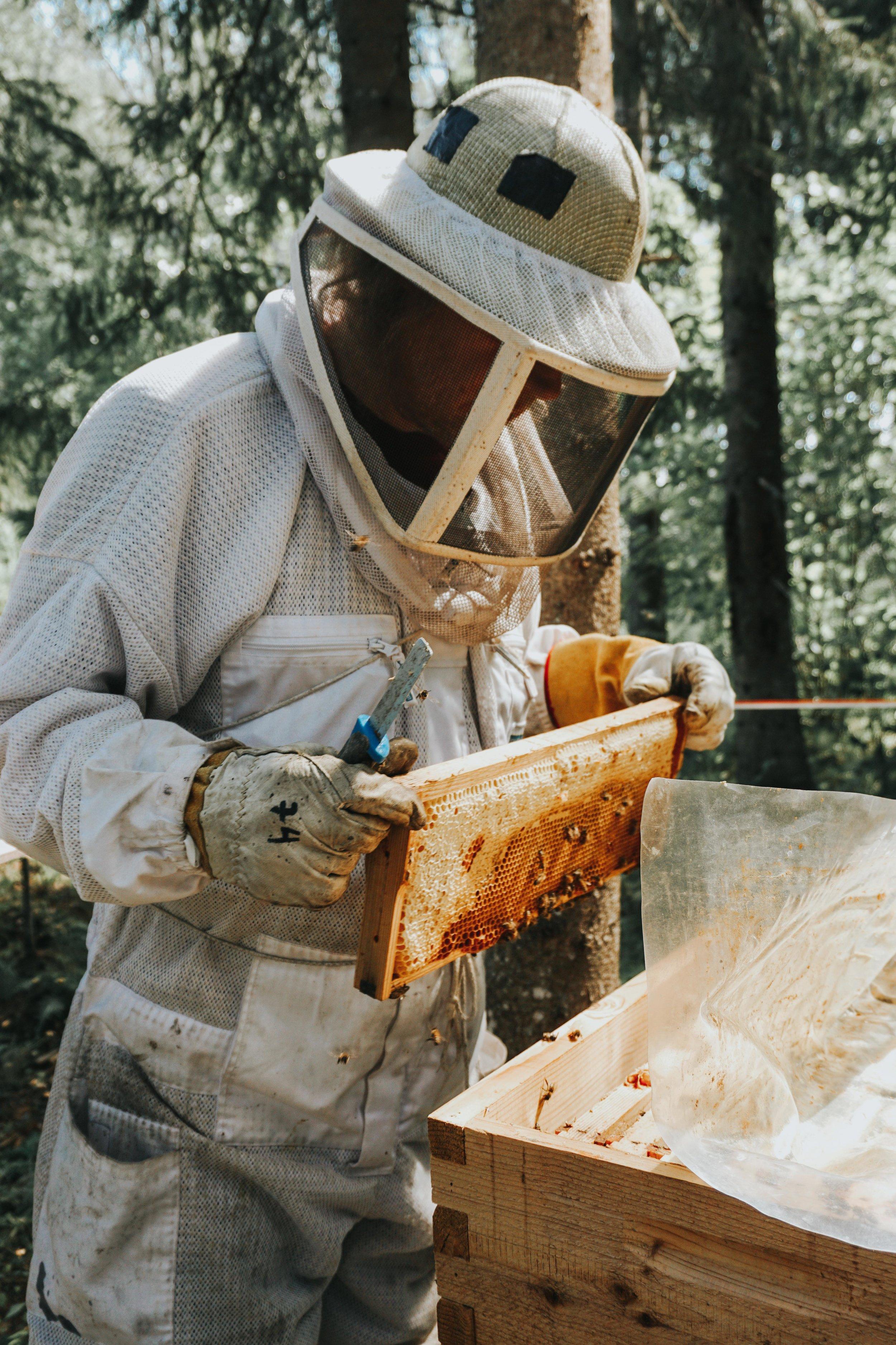 beekeeper-honeycomb.jpg