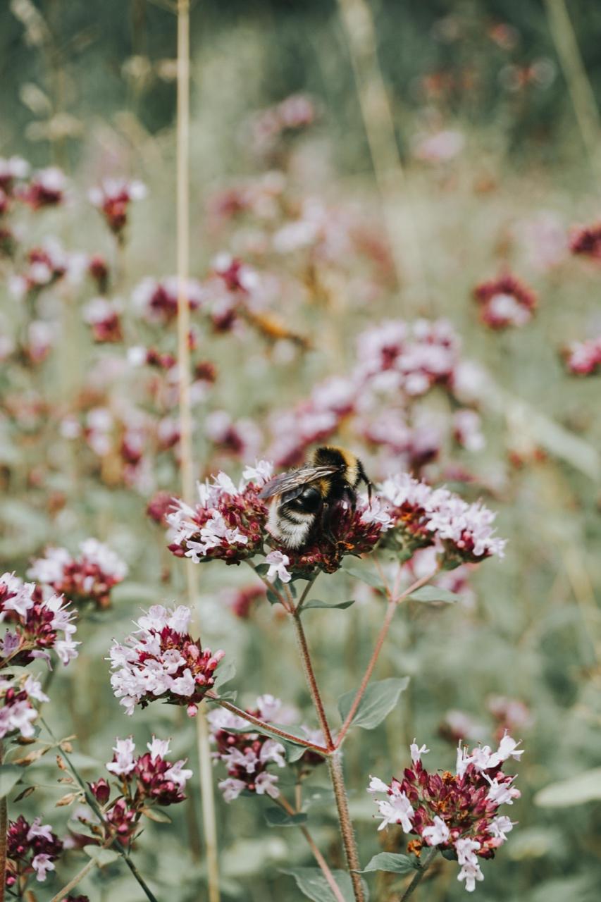 Nordic Honey_Organic Honey_Organic beekeeping_Beekeepers_Bees collecting nectar_Pure Raw Honey_Beehives