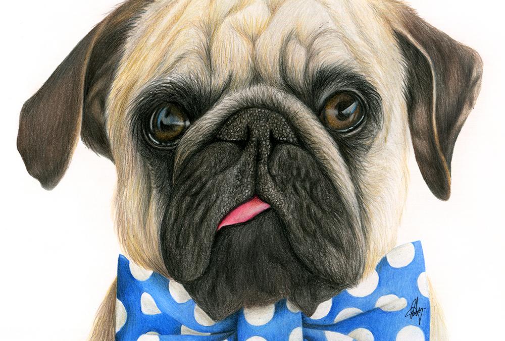 laura-eddy-drawing-bowtie-puglife-closeup-01.jpg