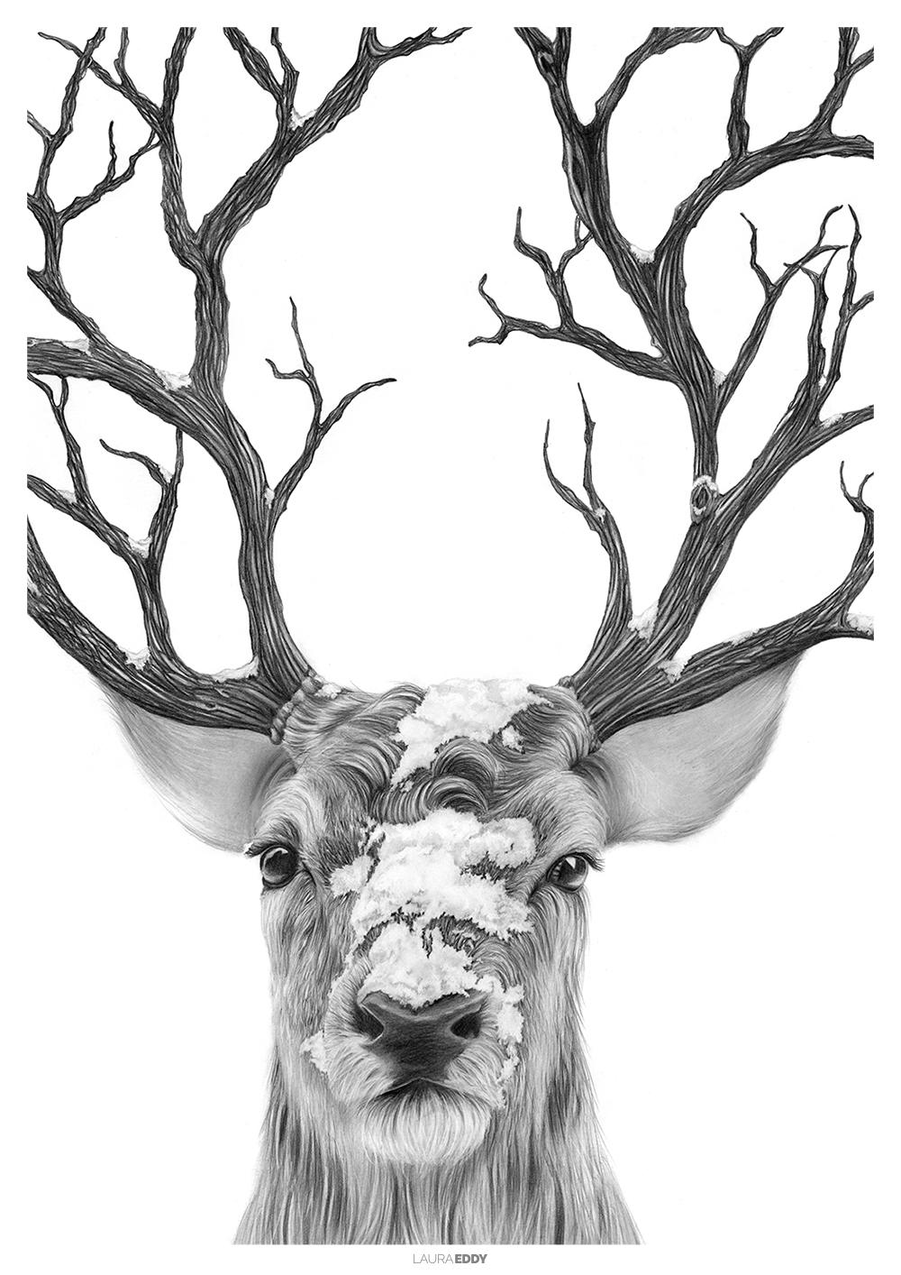 laura-eddy-drawing-winter-deer-branded.jpg